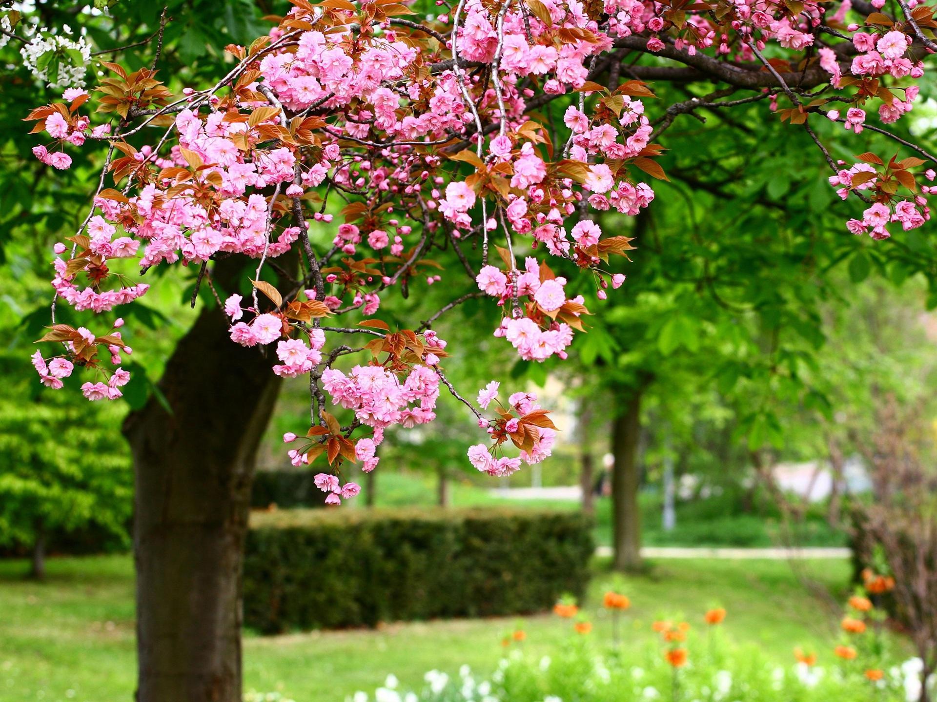 природа деревья цветы загрузить