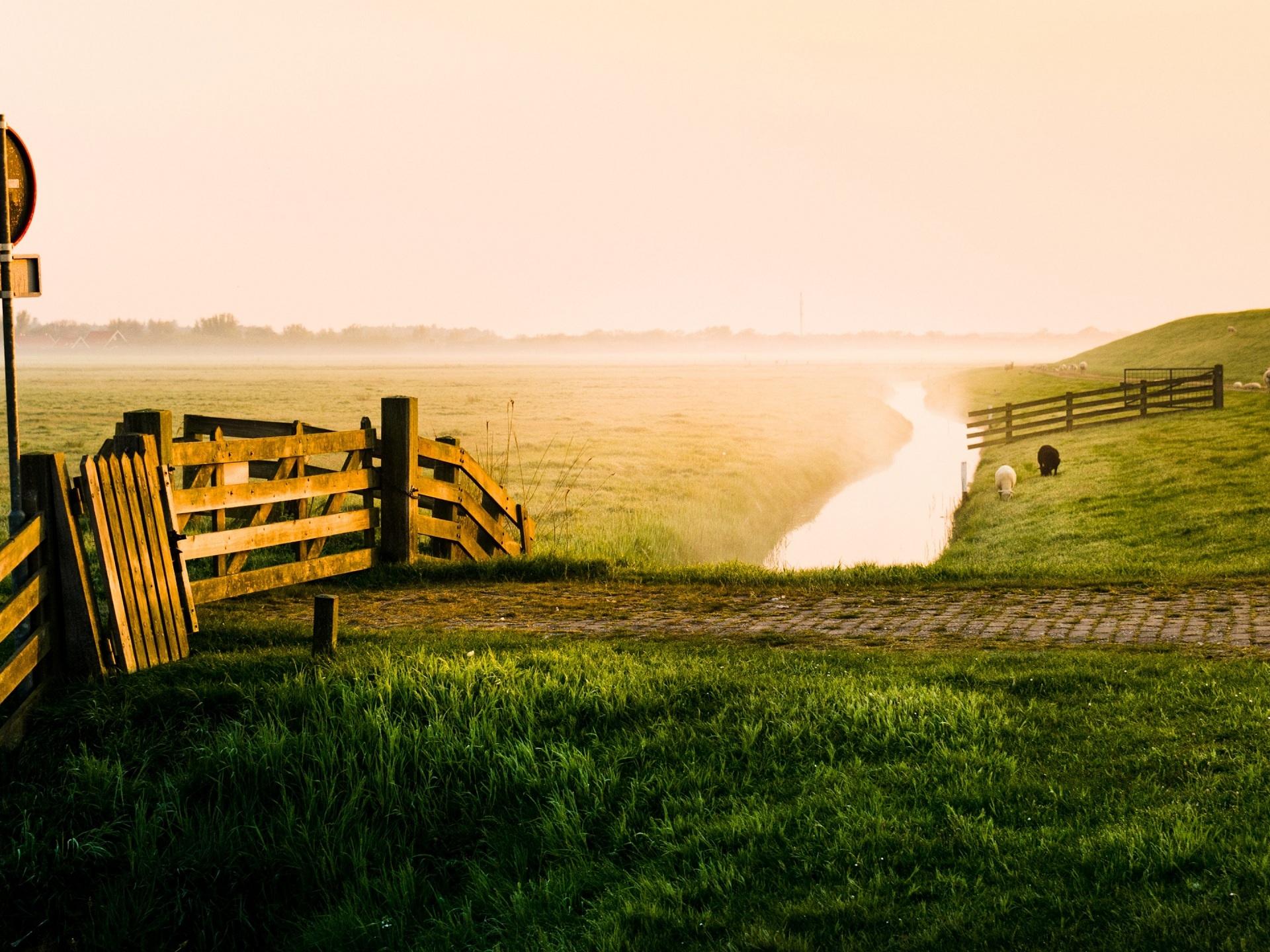 Belleza Temprano en la mañana de la granja prado arroyo ovejas Fondos de p