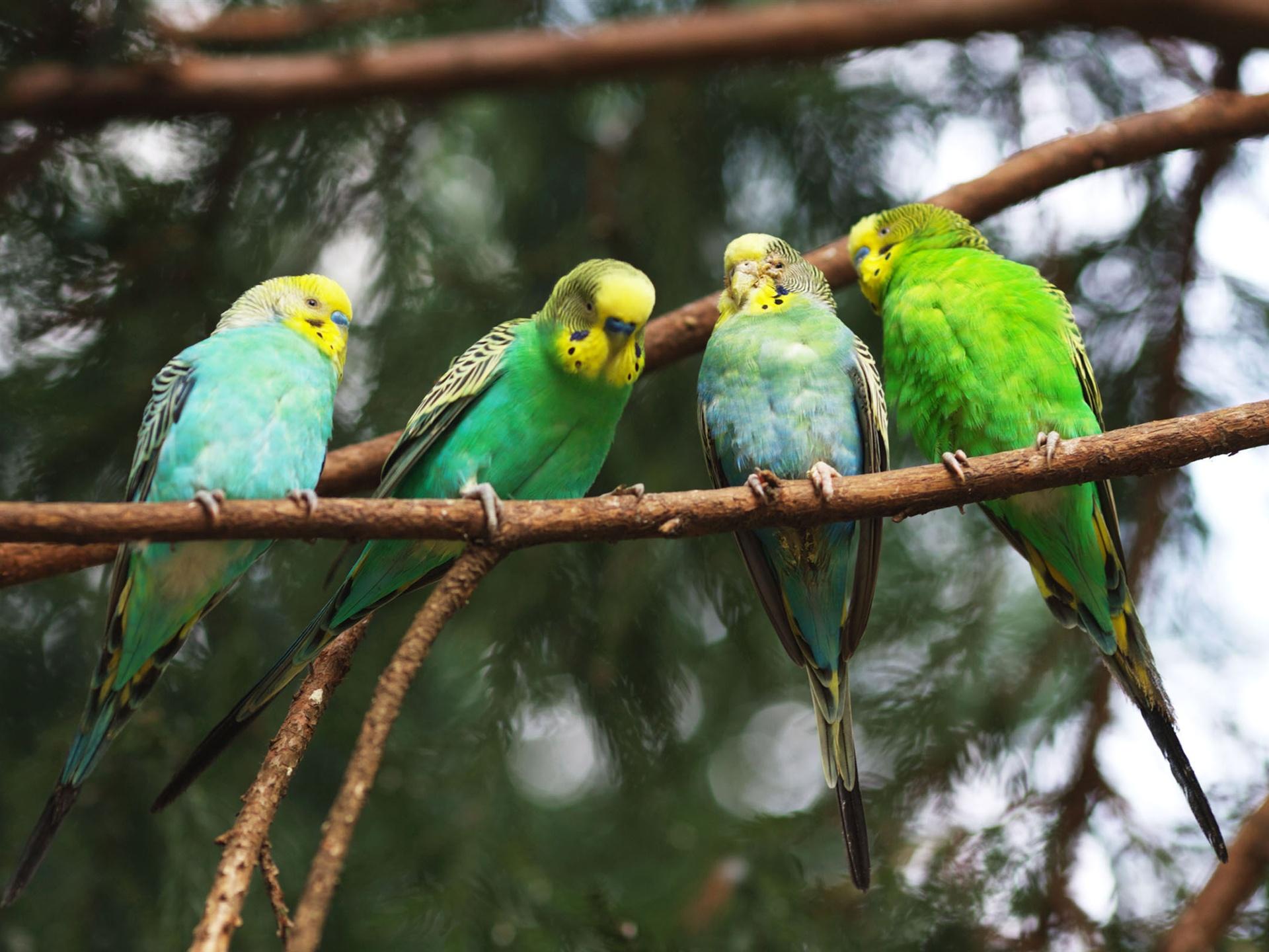 попугай макро деревья  № 737550 без смс