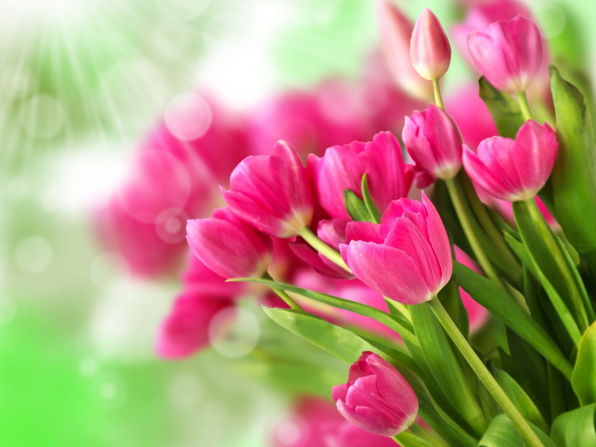 Wallpaper Pink Flowers Bouquet Tulips 1920x1440 Hd Picture Image