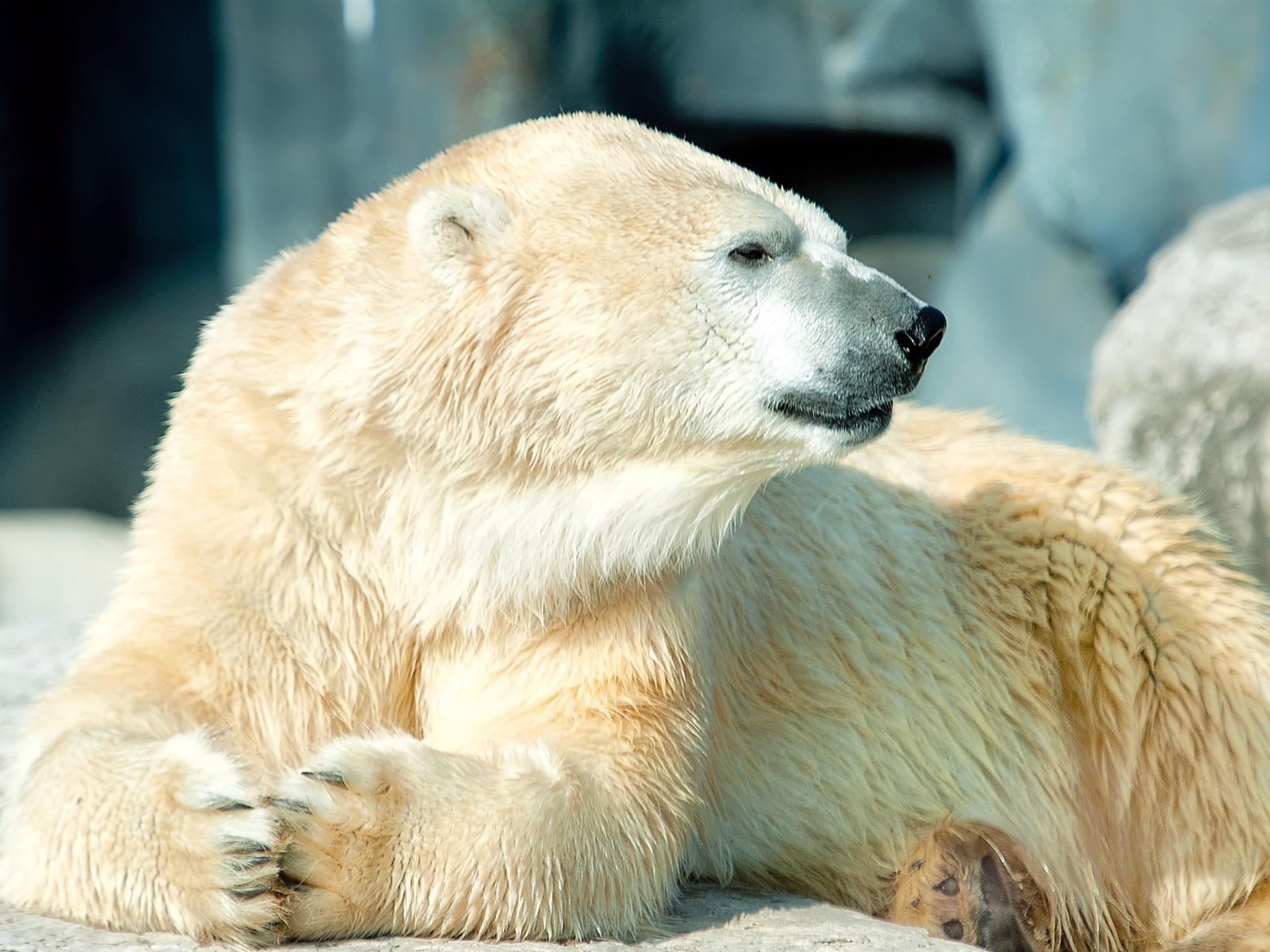 Медвежата загрузить