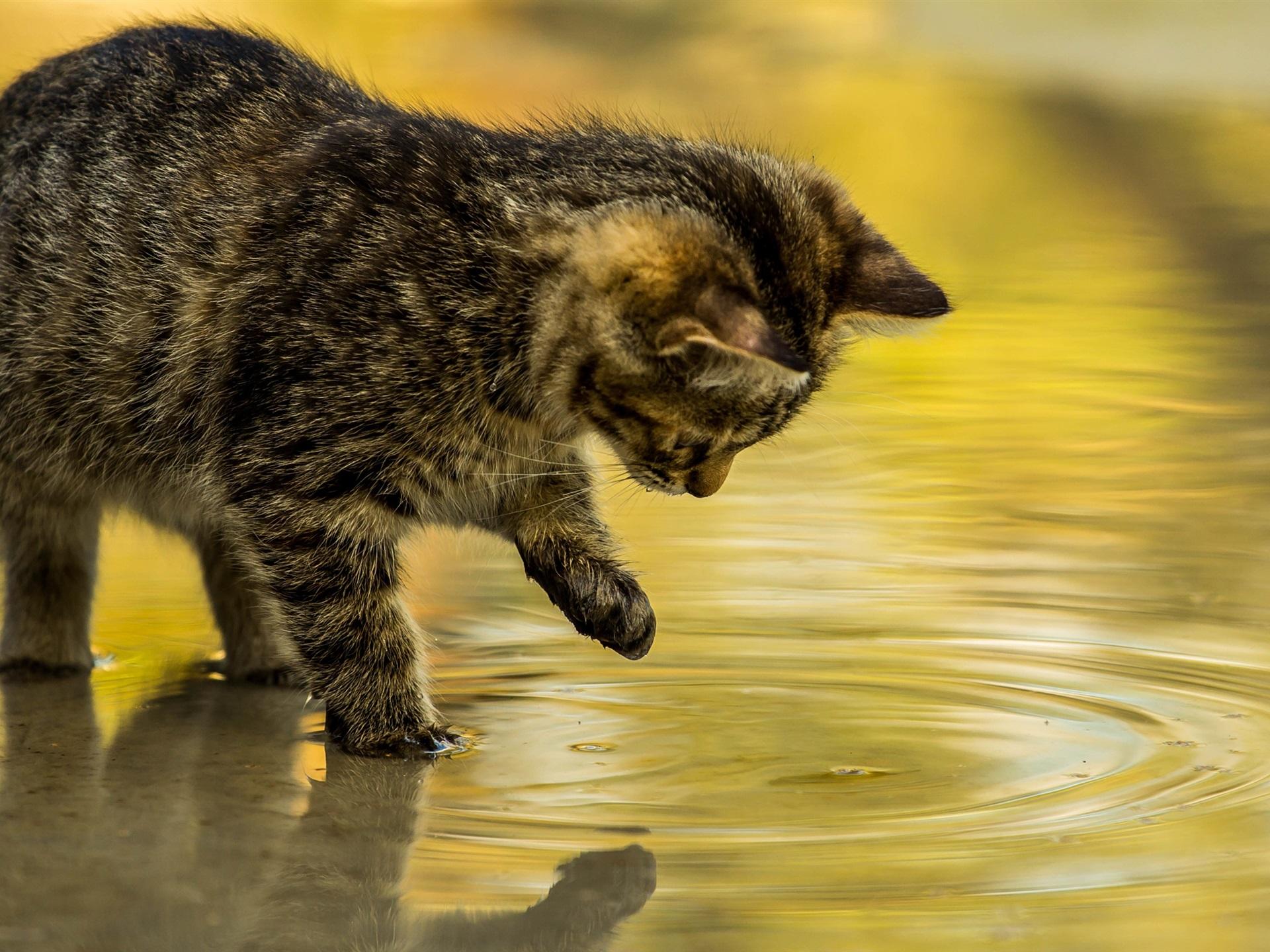 壁紙 子猫タッチ水 2560x1600 Hd 無料のデスクトップの背景 画像