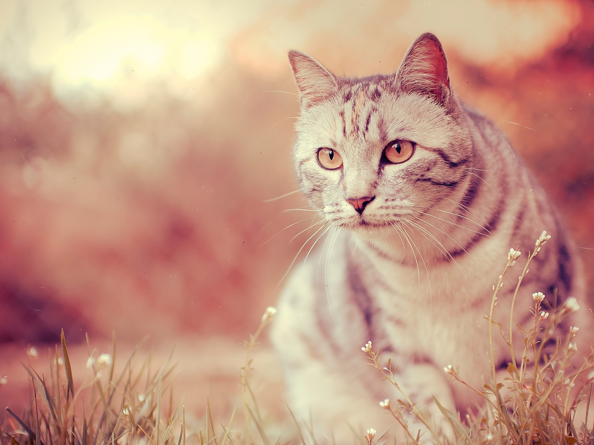 кошка глаза шерсть  № 1963660 без смс