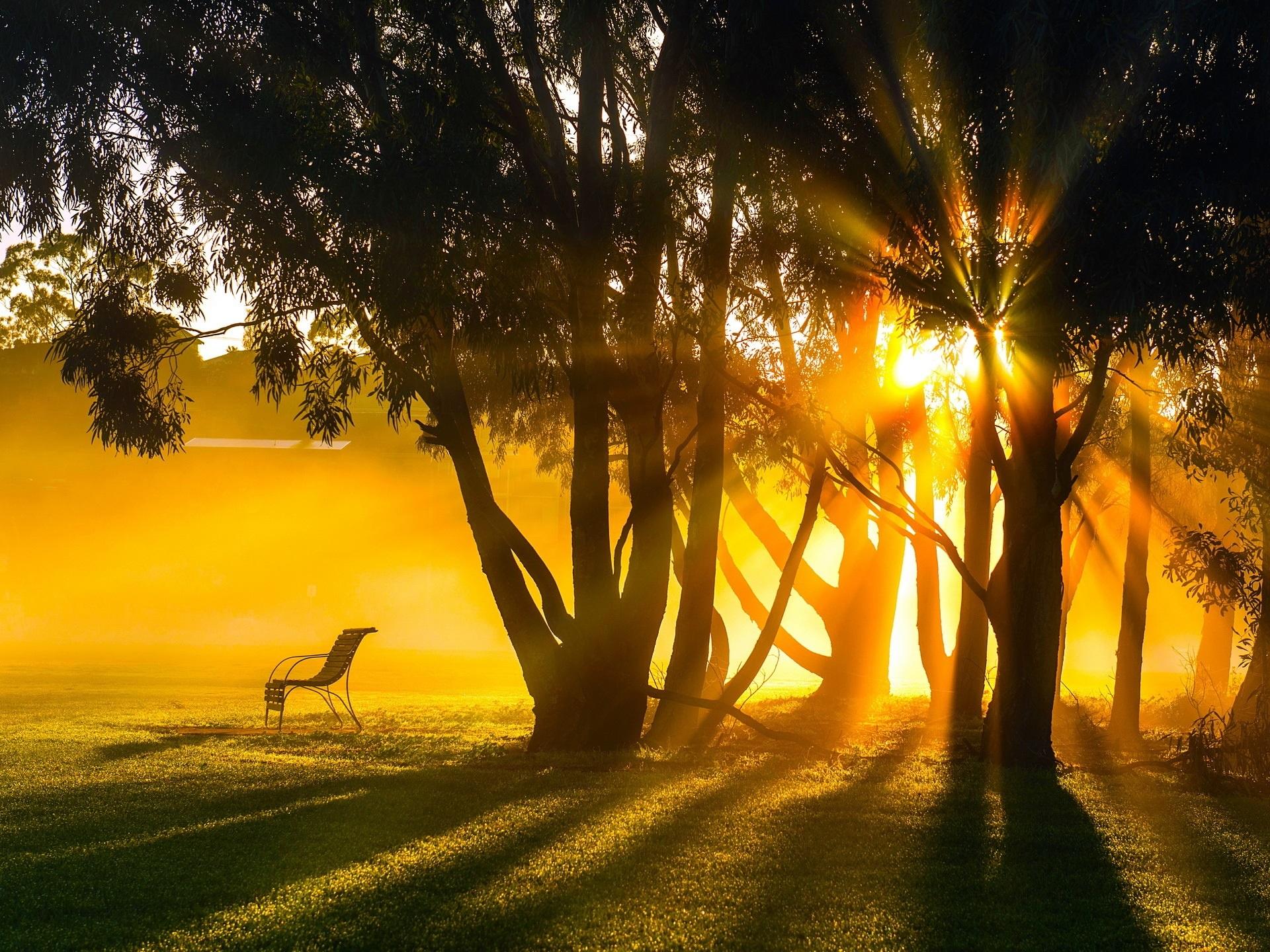 sun fog sunrise trees -#main