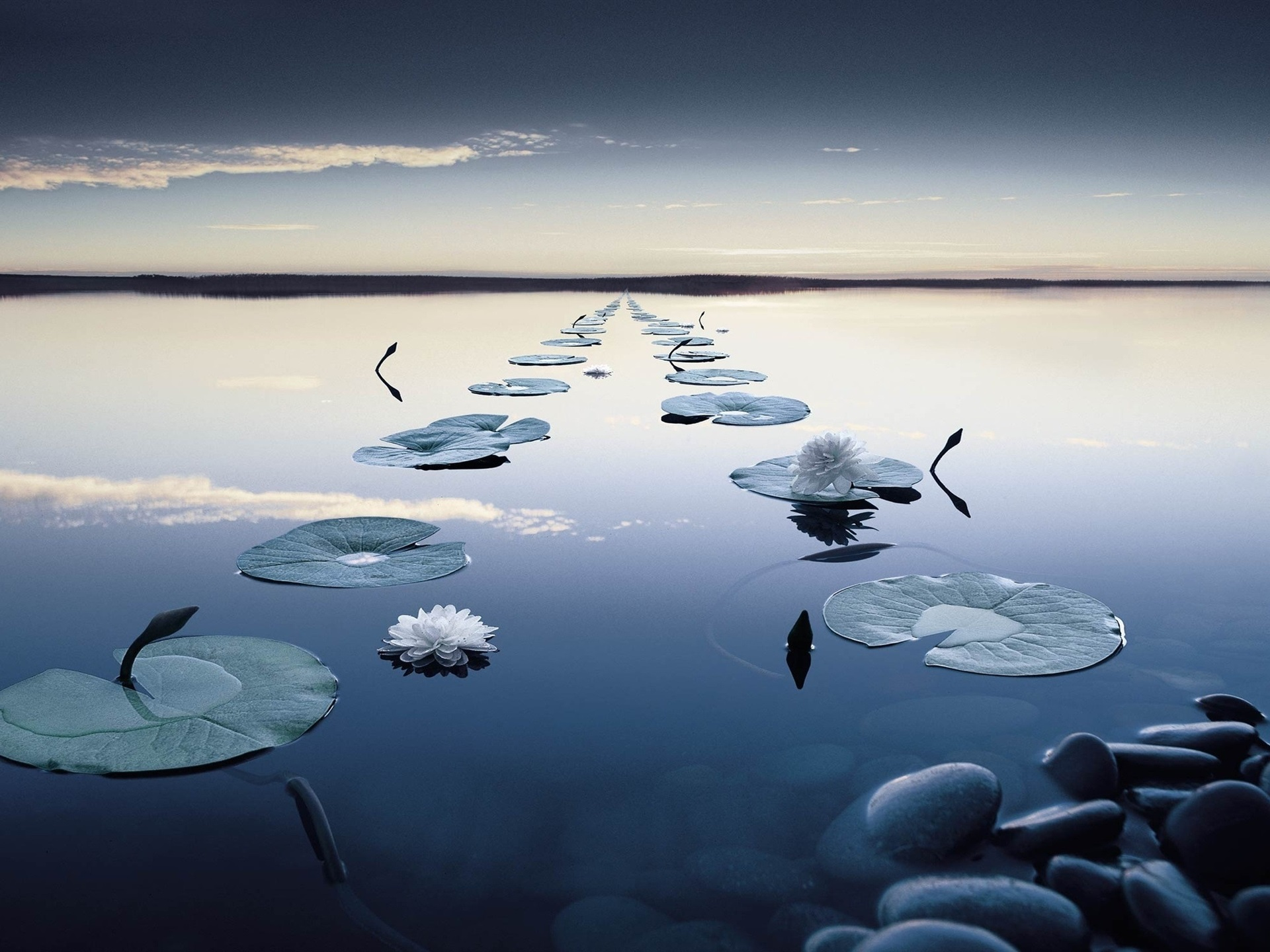 кувшинки озеро небо лес  № 1264641  скачать