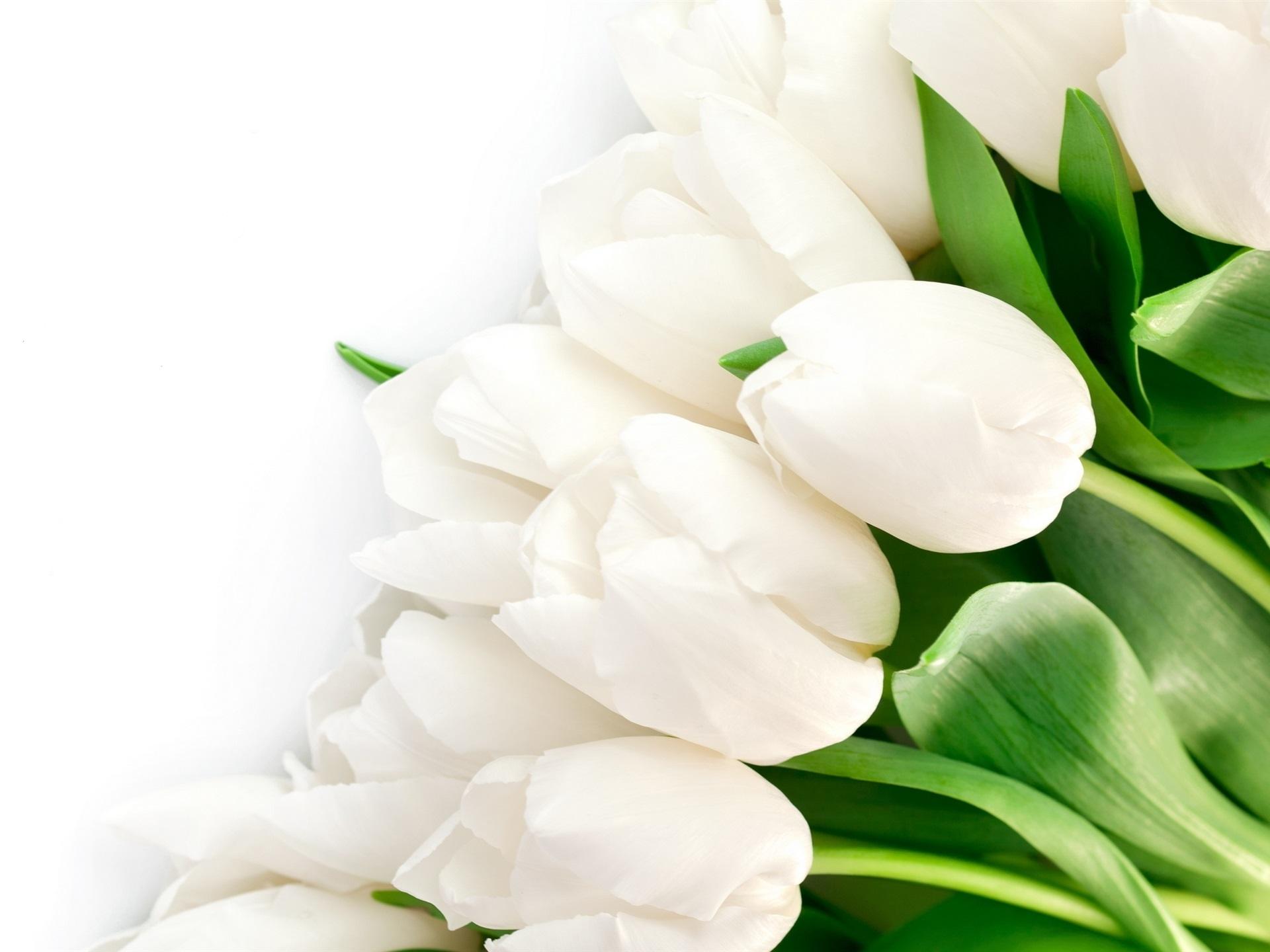 Открытки с белыми тюльпанами 8 марта