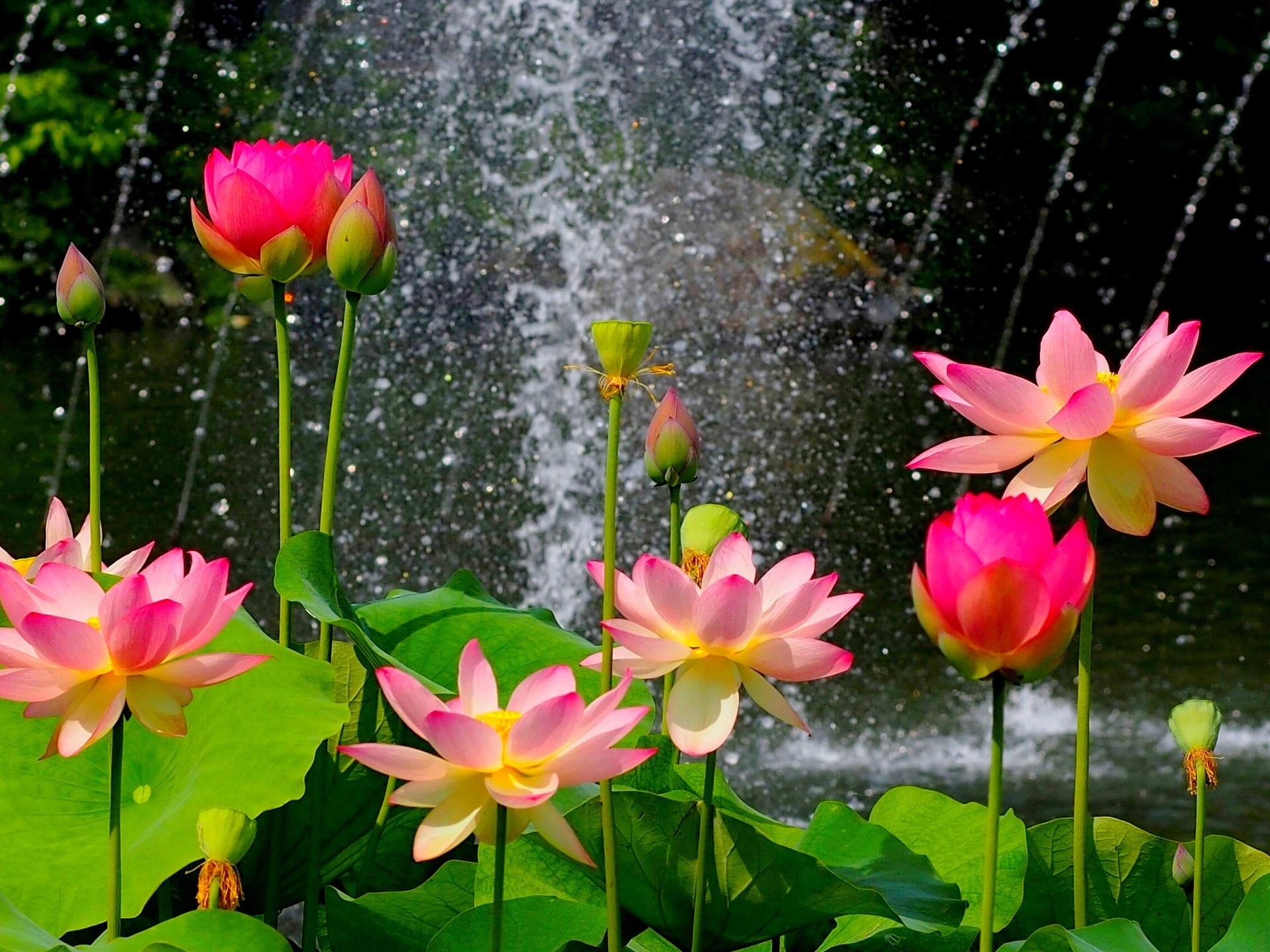 Fotos de flores de floriculturas 40