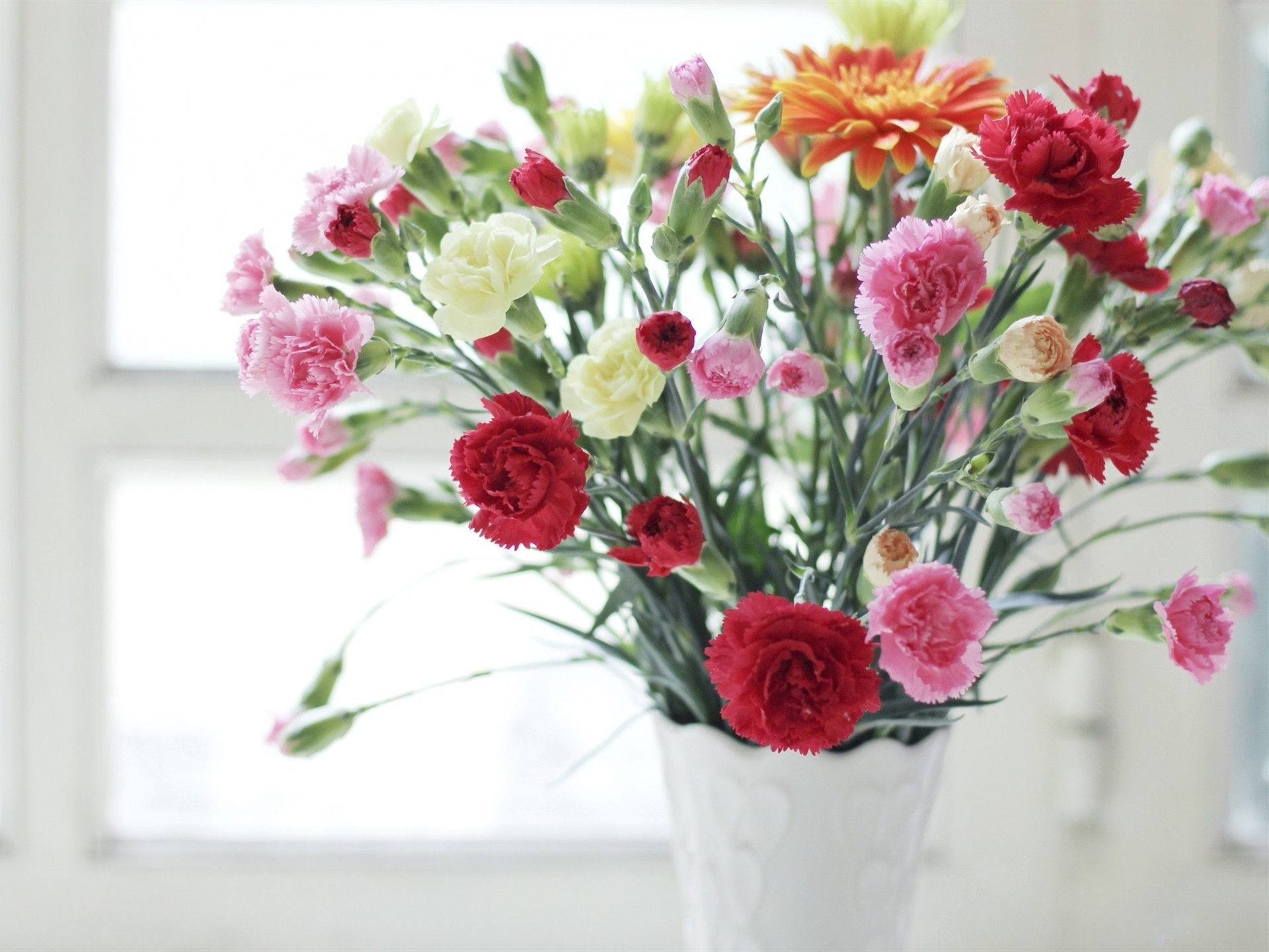 Fondos De Pantalla Claveles, Rosa, Rojo, Blanco, Flores