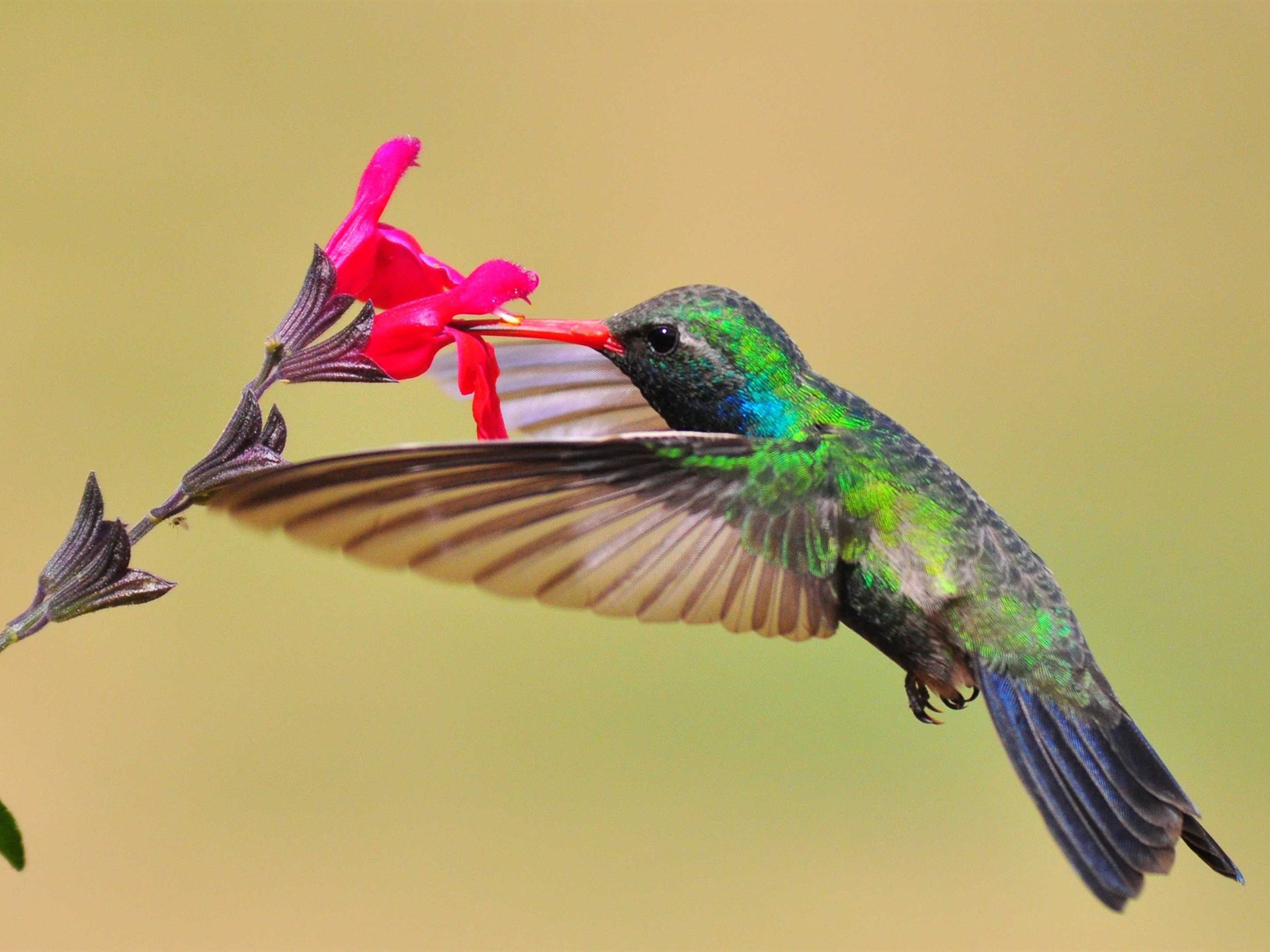 Животные картинка колибри для раздавленного