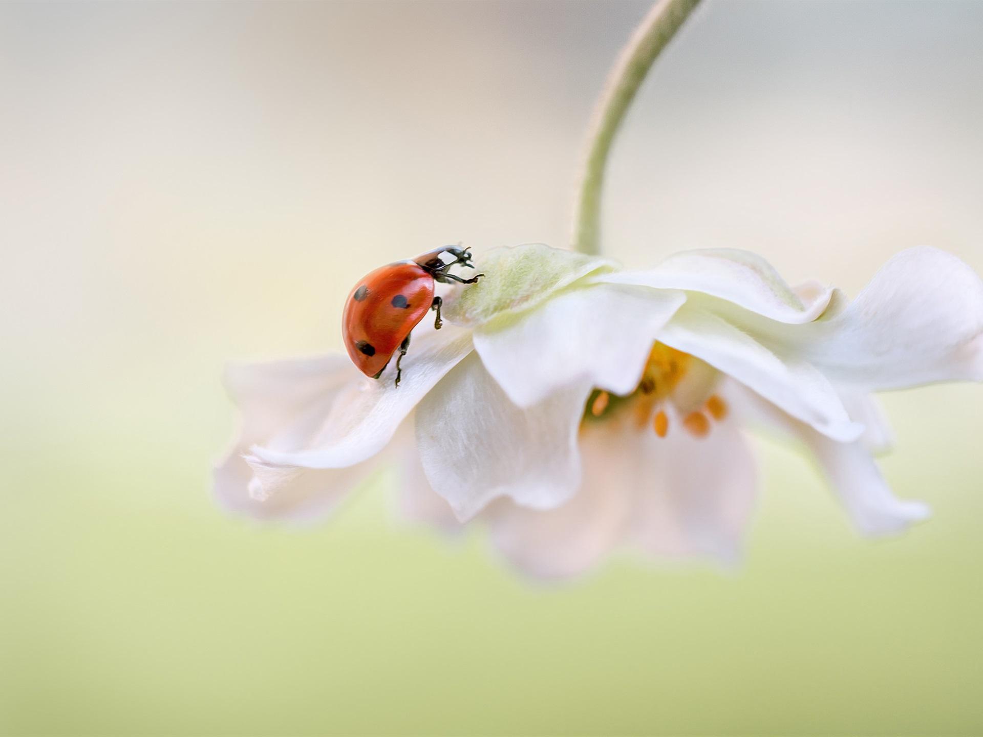 Цветы божья коровка лепестки скачать
