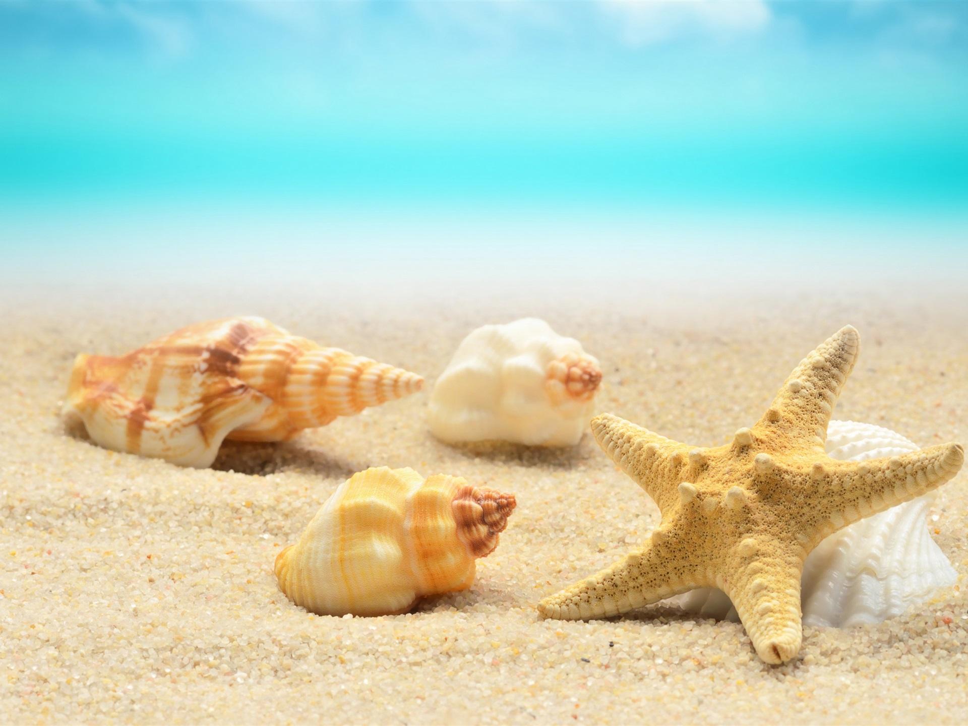 壁紙 貝殻 ヒトデ ビーチ 海 3840x2160 Uhd 4k 無料のデスクトップの背景 画像