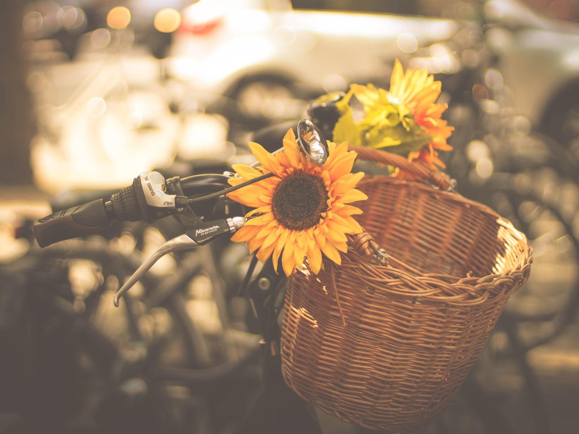 Fondos De Pantalla Girasoles, Bicicleta 1920x1440 HD Imagen