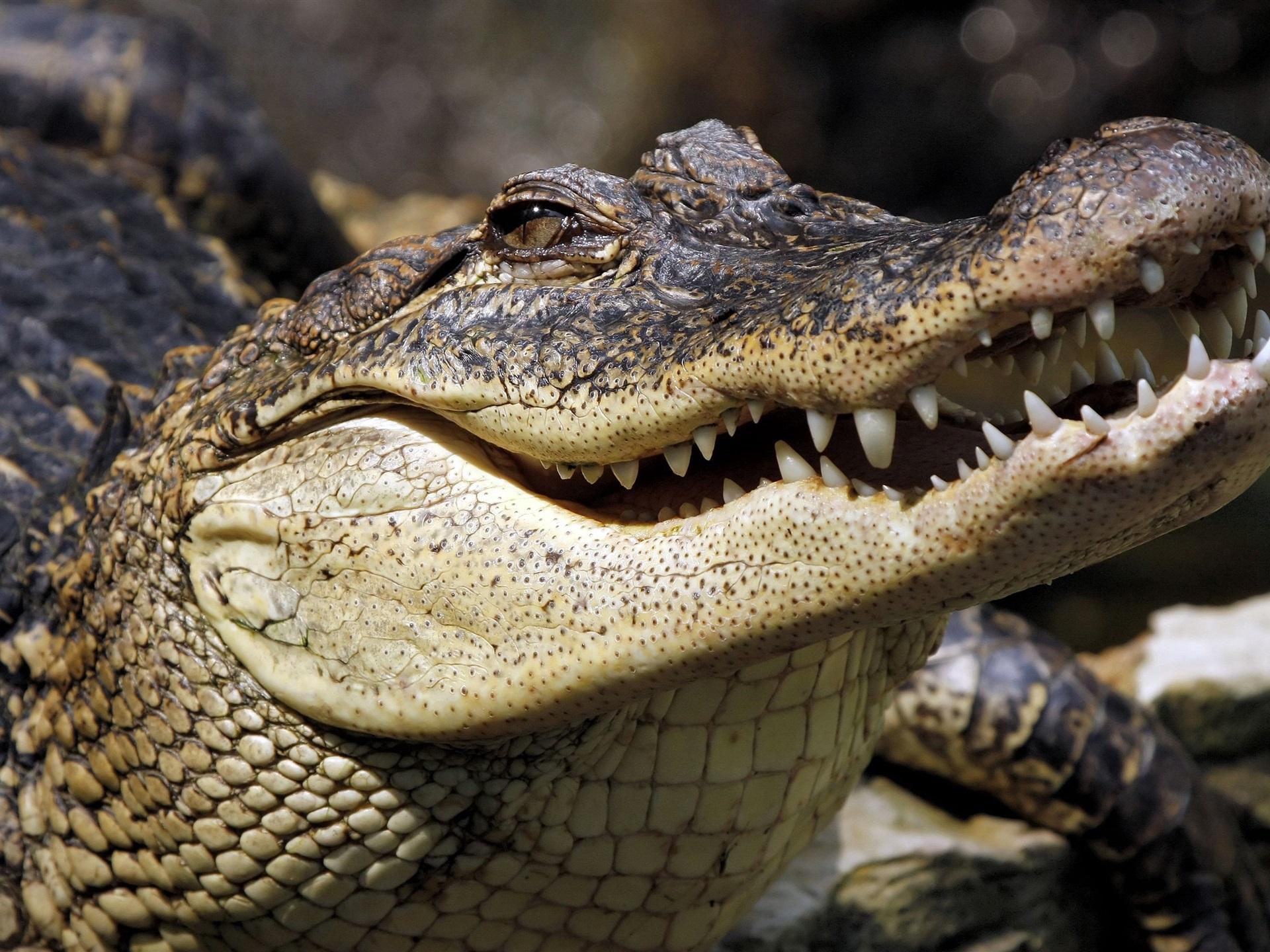 Wallpaper Crocodile, teeth, mouth, reptile 3840x2160 UHD ...