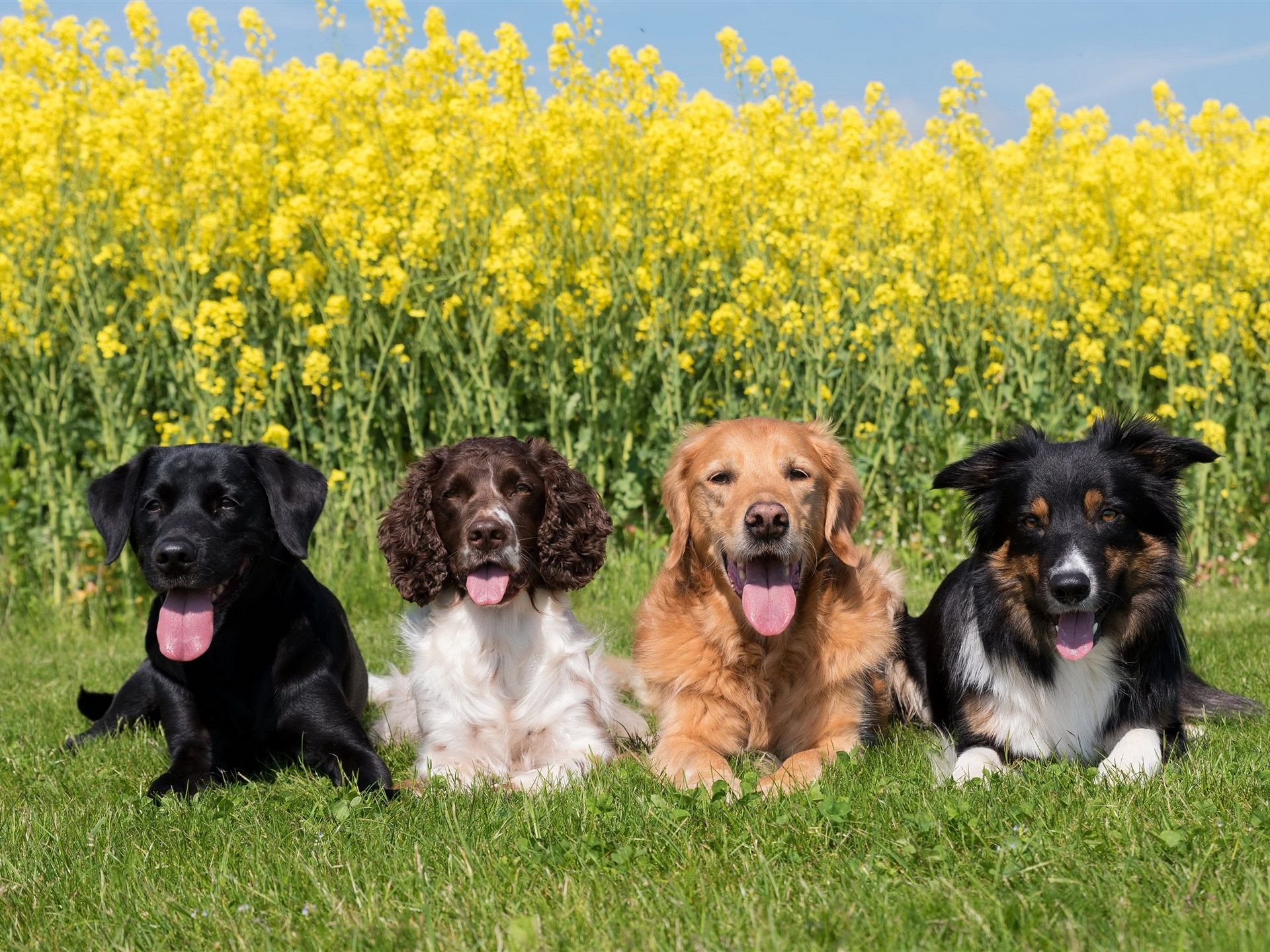 модницы картинки собак разных пород вместе приобрести