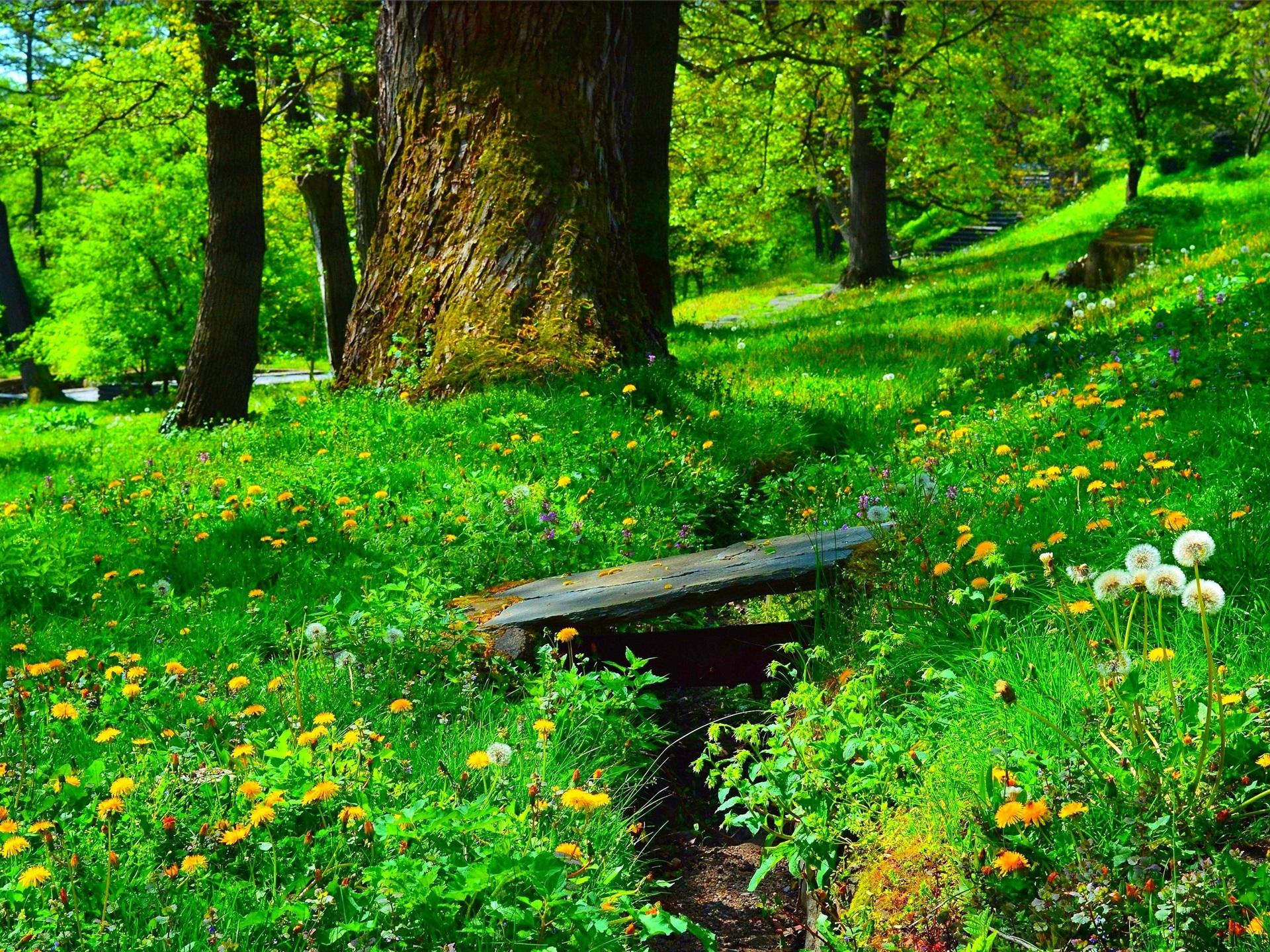 трехкомнатная, картинки деревья цветы трава вода многообразие выбора