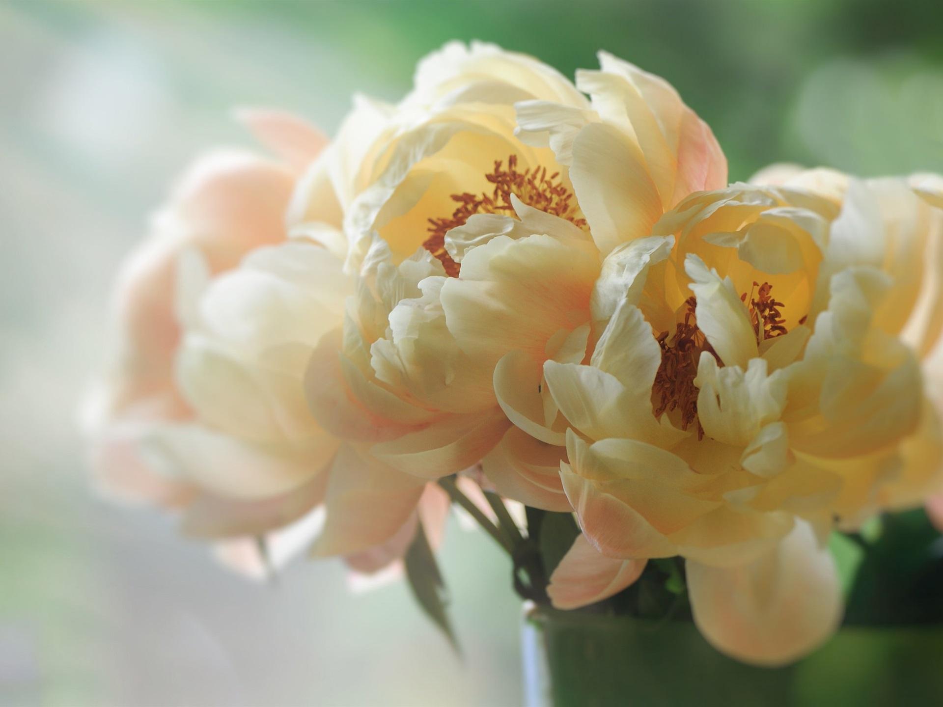 кувалдой, отпилили большие фотографии профессионалов цветов кадр красивого
