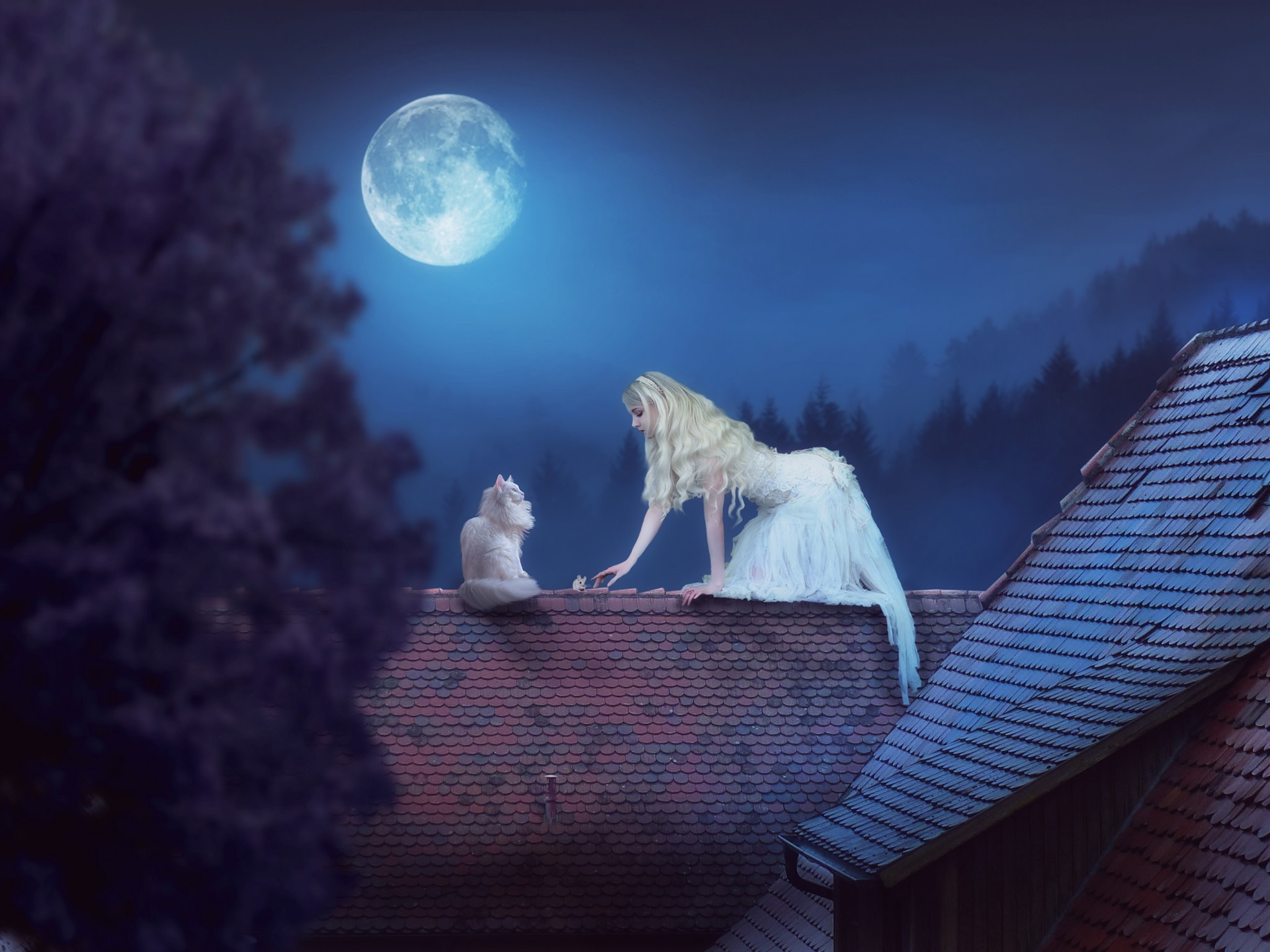 Cool Wallpaper Night Cat - White-skirt-girl-and-cat-roof-moon-night-creative-picture_1920x1440  Photograph.jpg