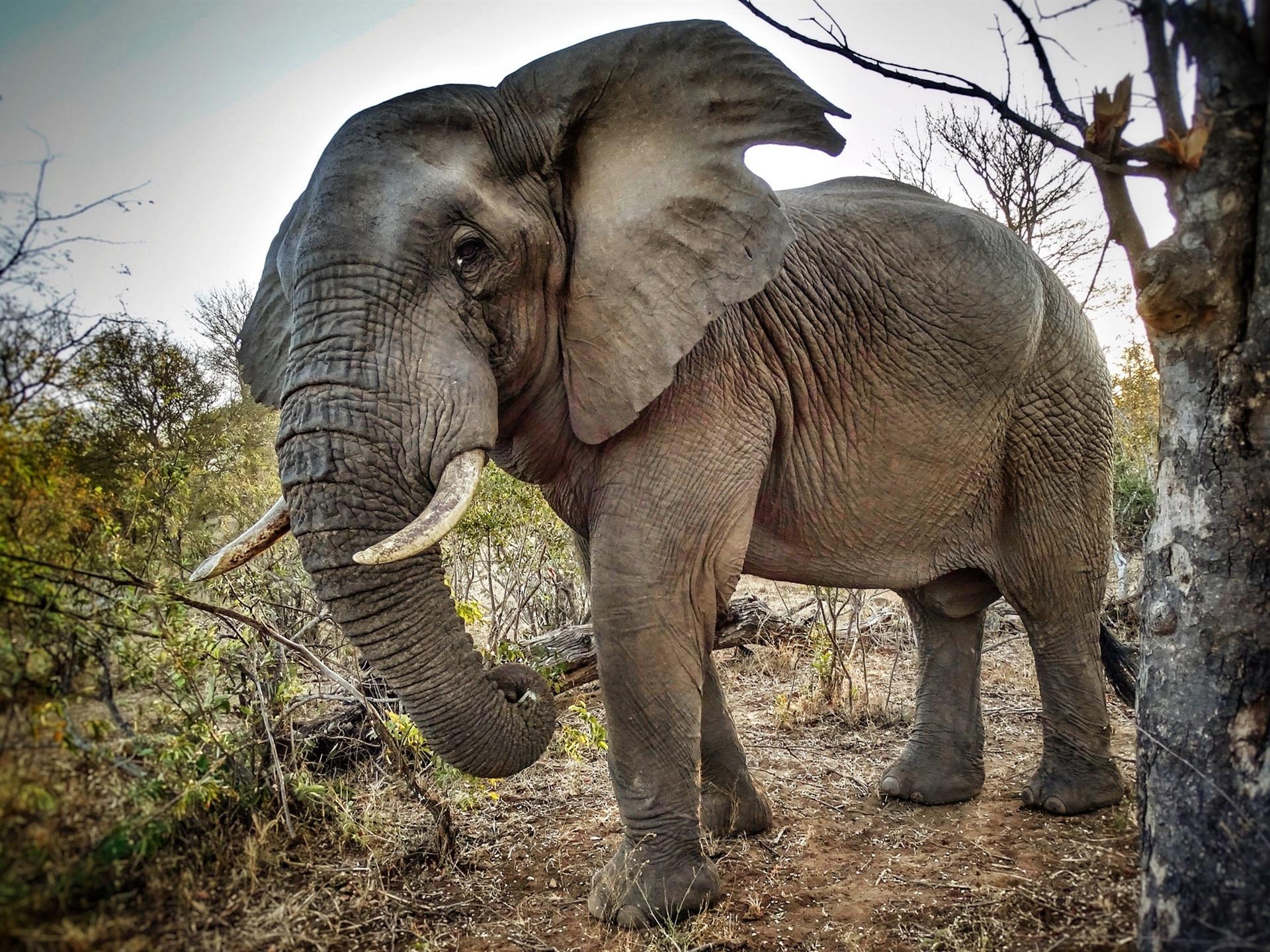 смотреть картинки со слонами встретились мне
