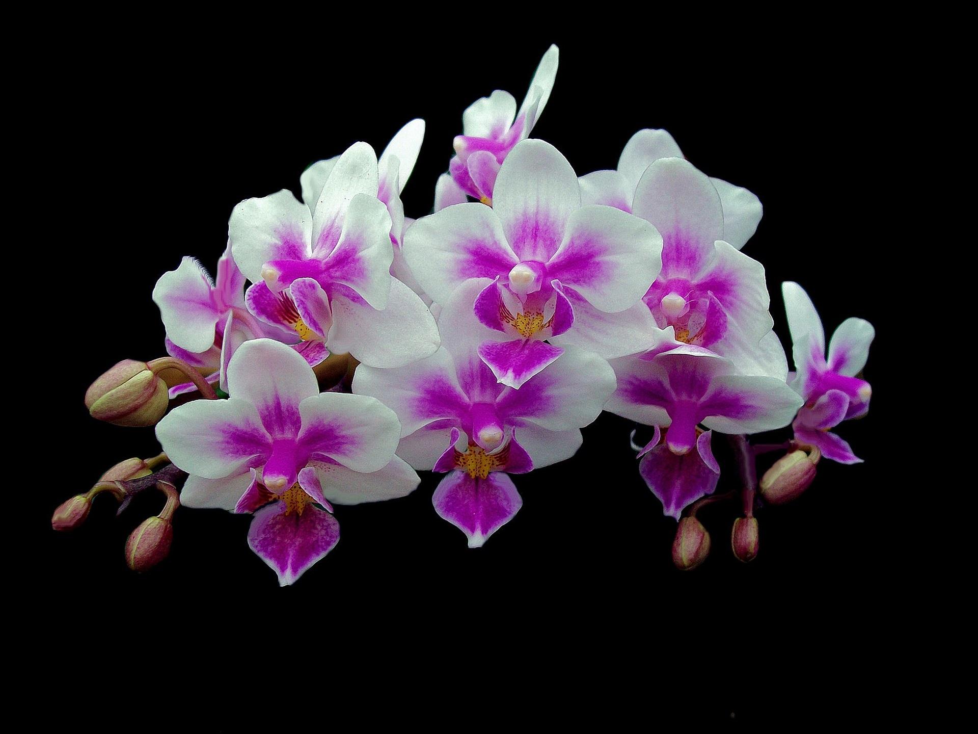 Орхидеи картинки на заставку