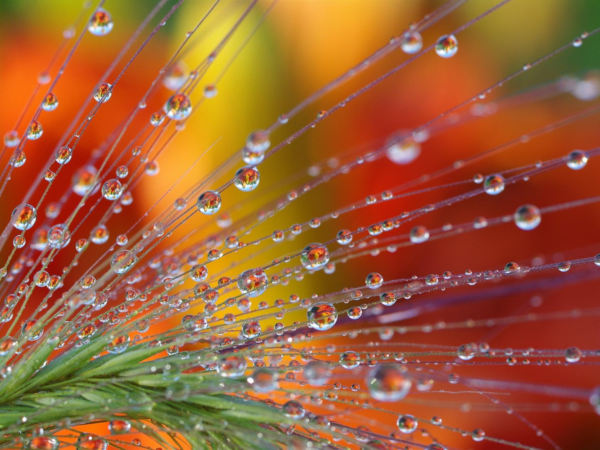 Красивые фото макросъемки воды свои фото