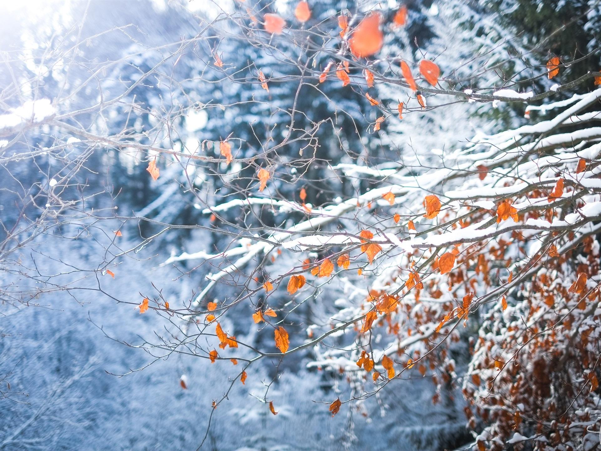 картинки листьев зимой отпрысков