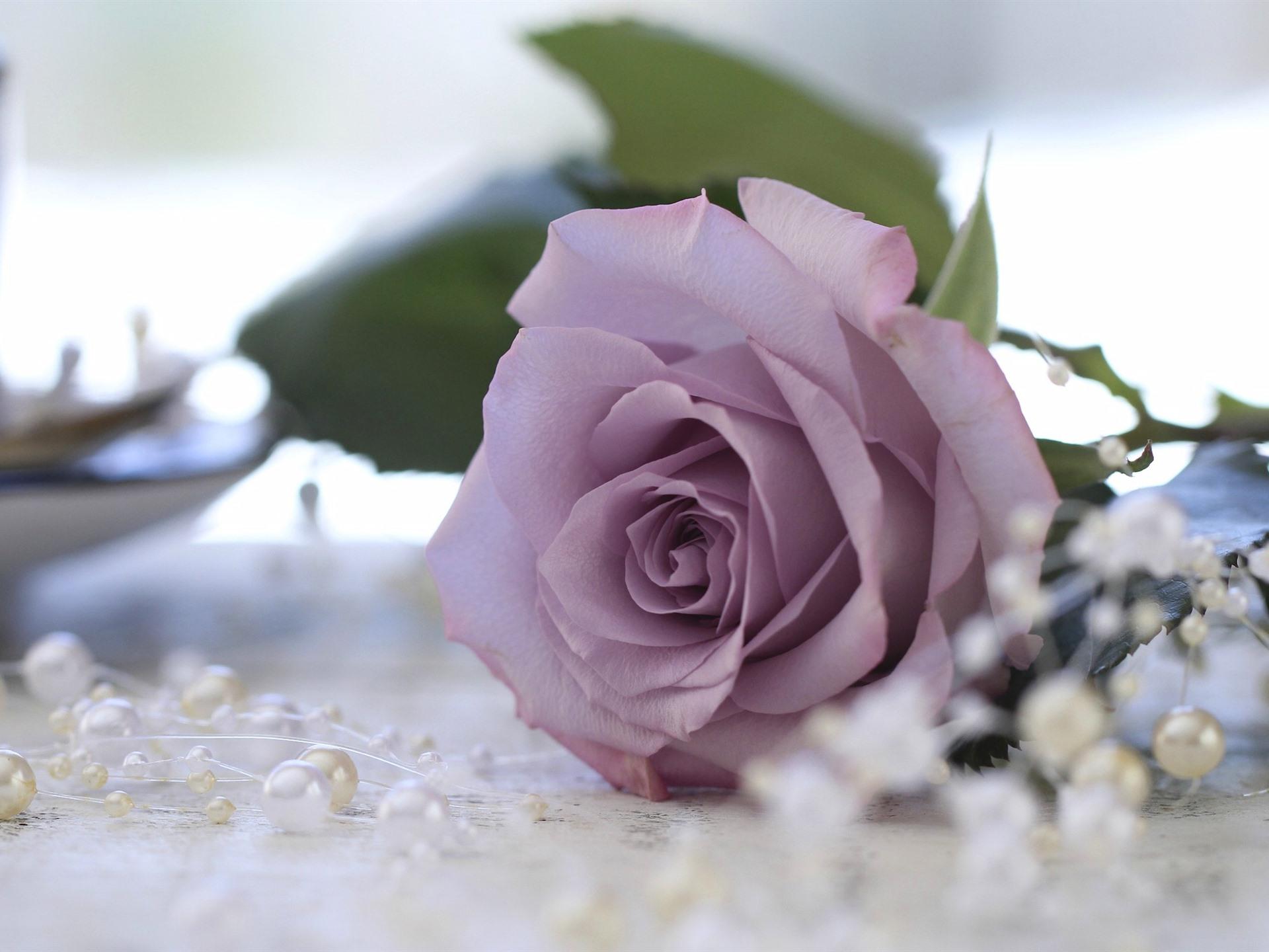 Lila Rose Perlen 1920x1440 Hd Hintergrundbilder Hd Bild