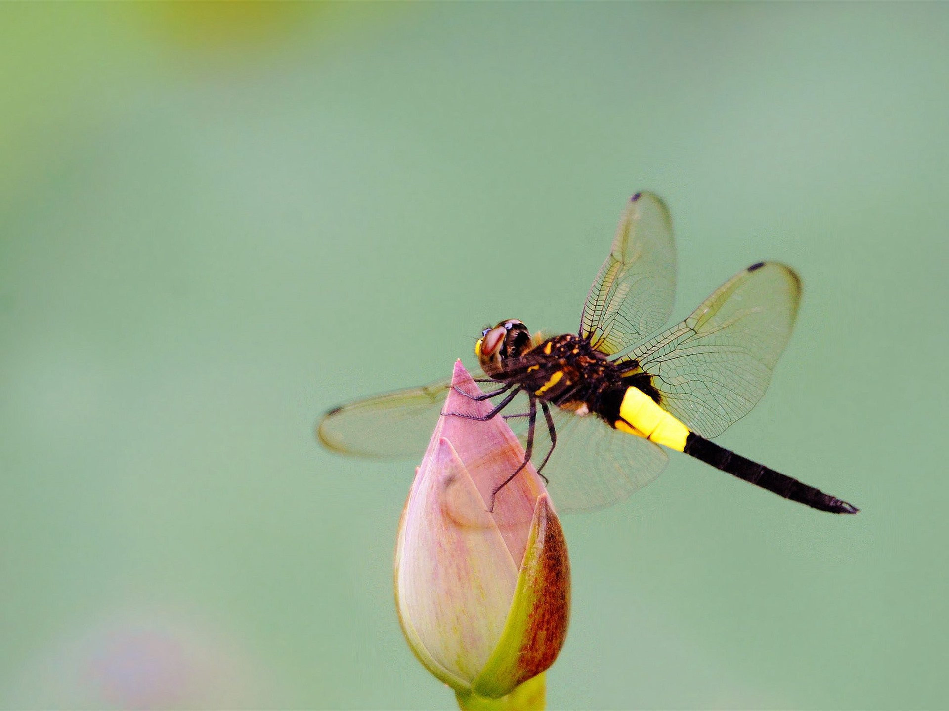 Dragonfly desktop wallpapers HD and wide