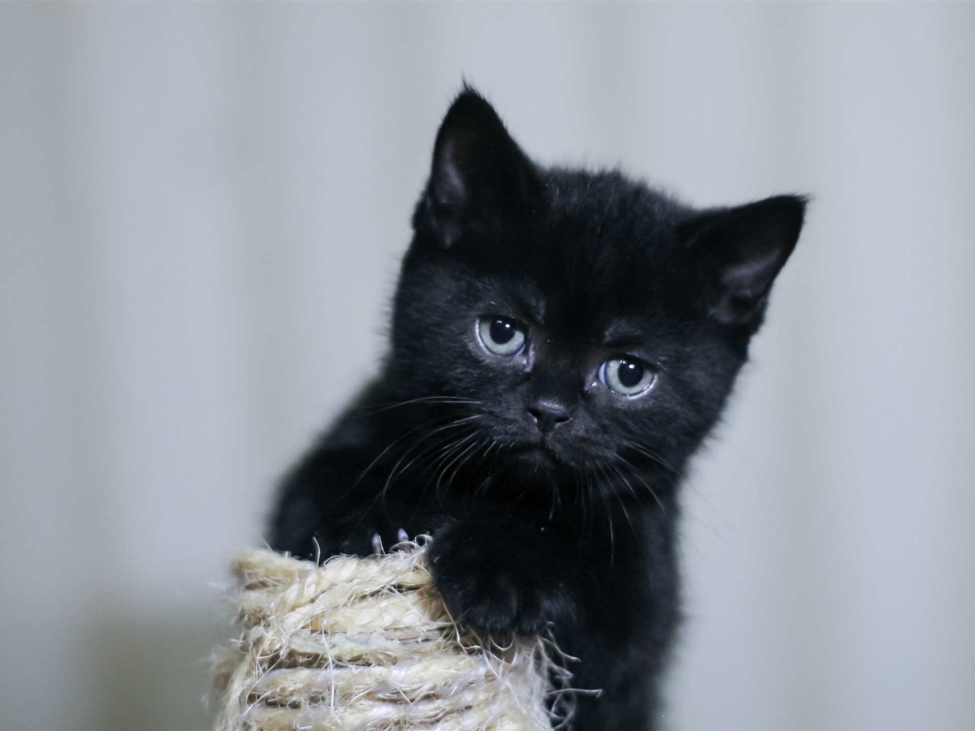 Wallpaper Black Kitten Fluffy 3840x2160 Uhd 4k Picture Image