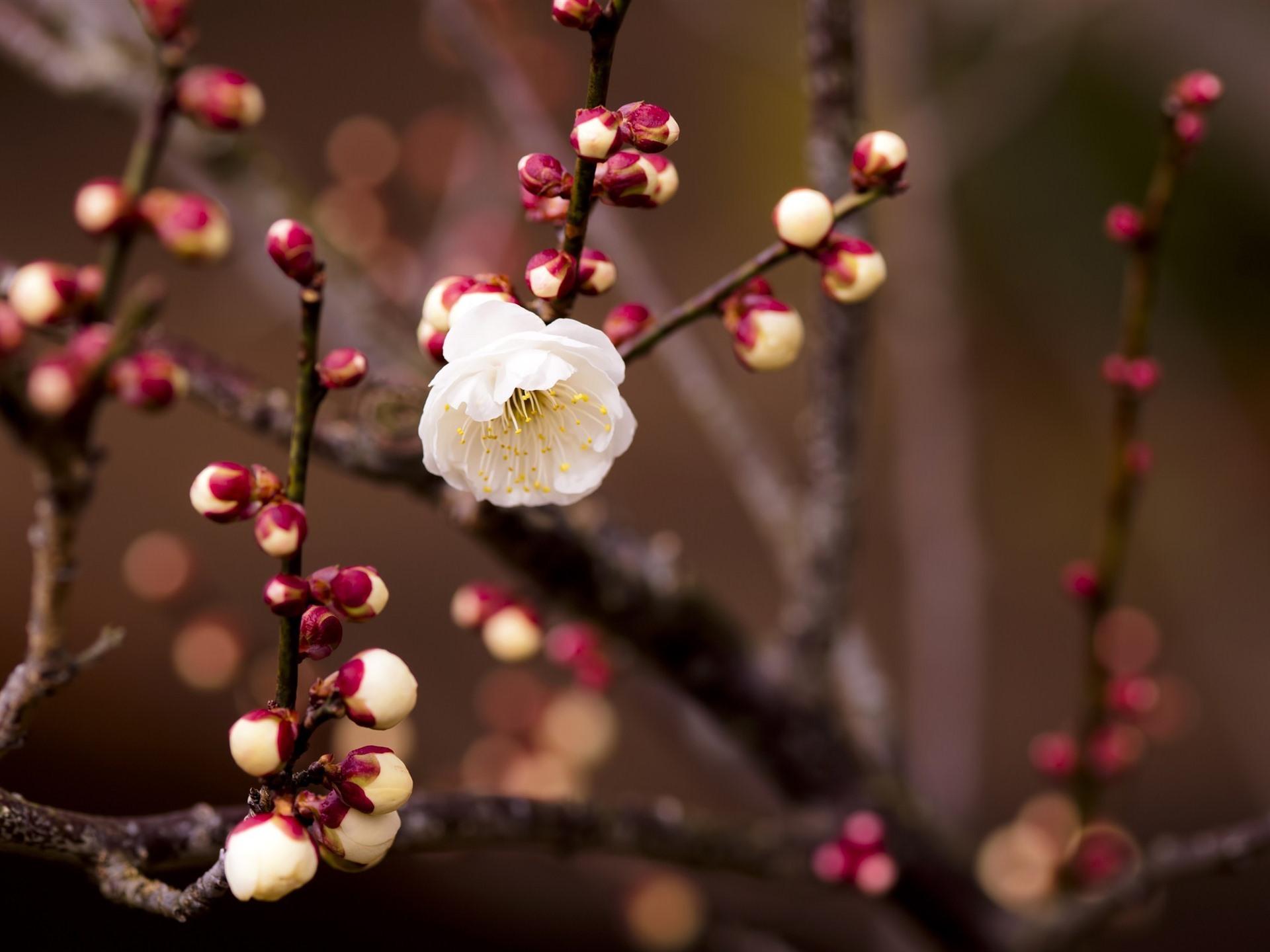 один картинки весенних веточек и цветов стихи
