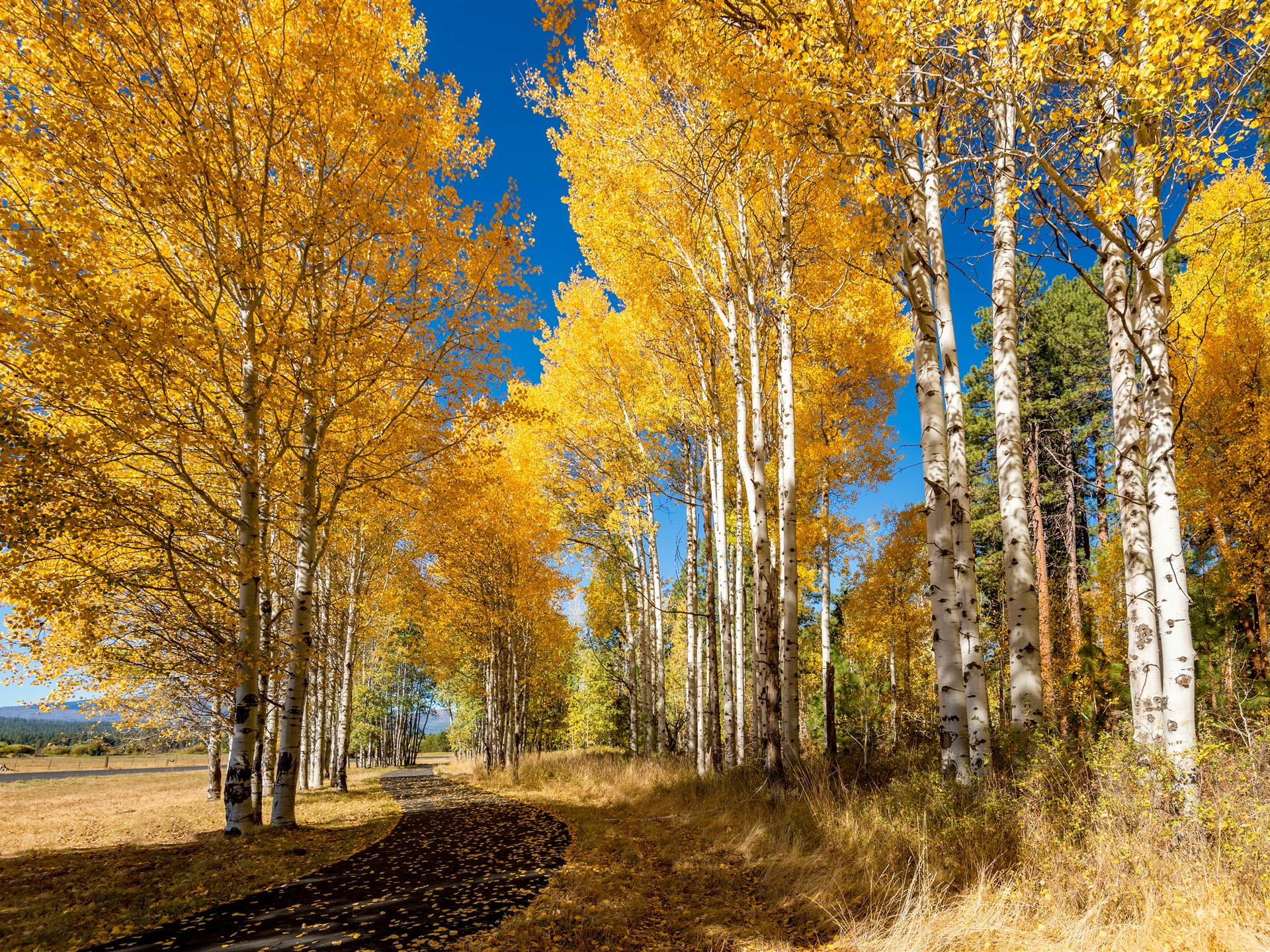 надежно показать картинки осень золотая шаттере итог