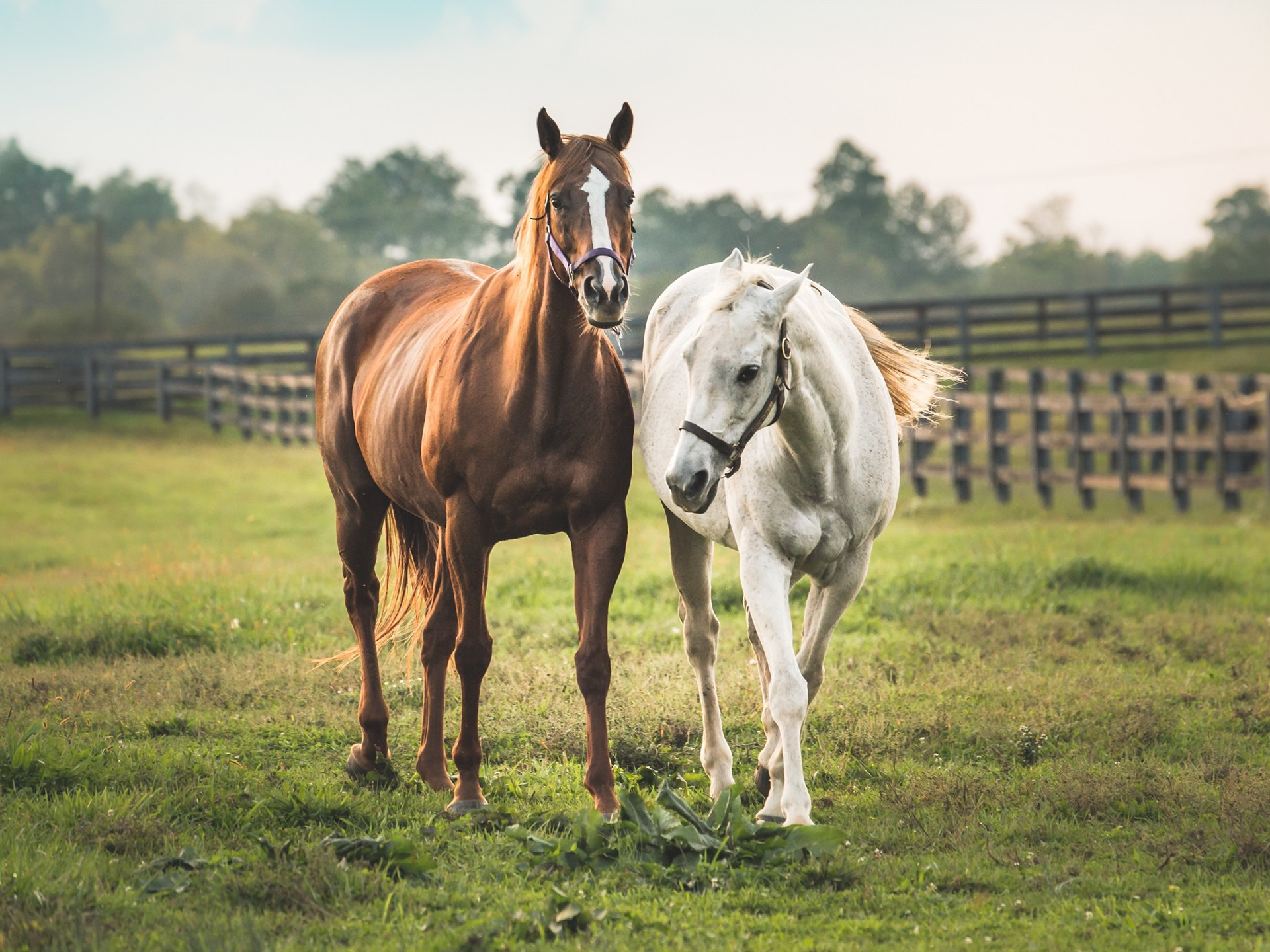 Wallpaper Two Horses White And Brown 1920x1440 Hd Picture Image