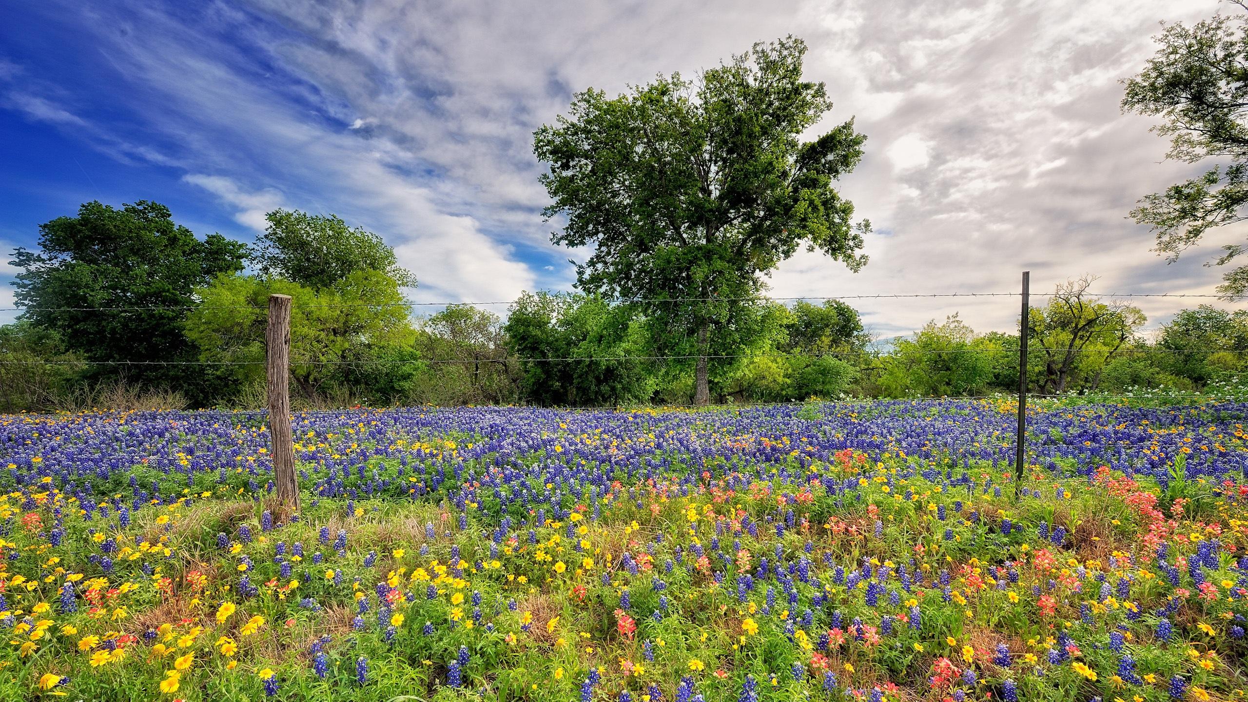 вертикальное фото цветы на фоне пейзажа полевые нежелательных