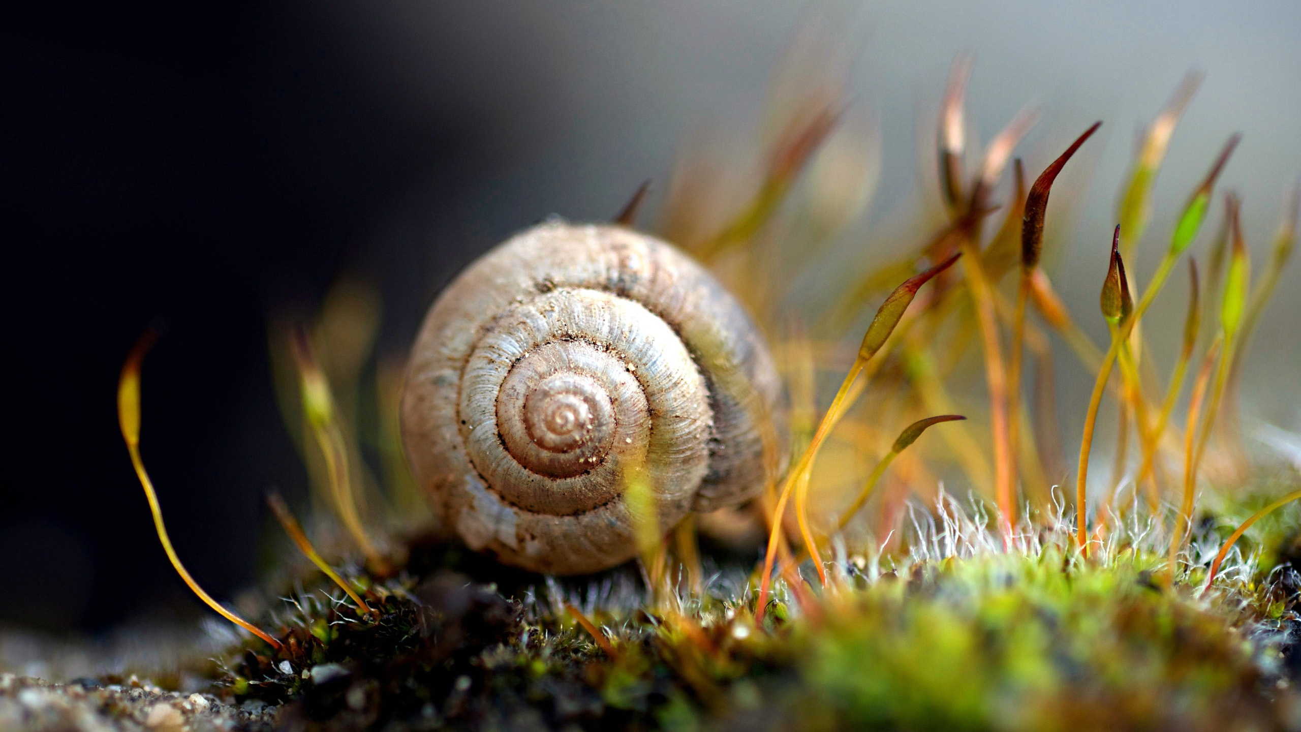 Wallpaper Snail 2560x1600 HD Picture, Image