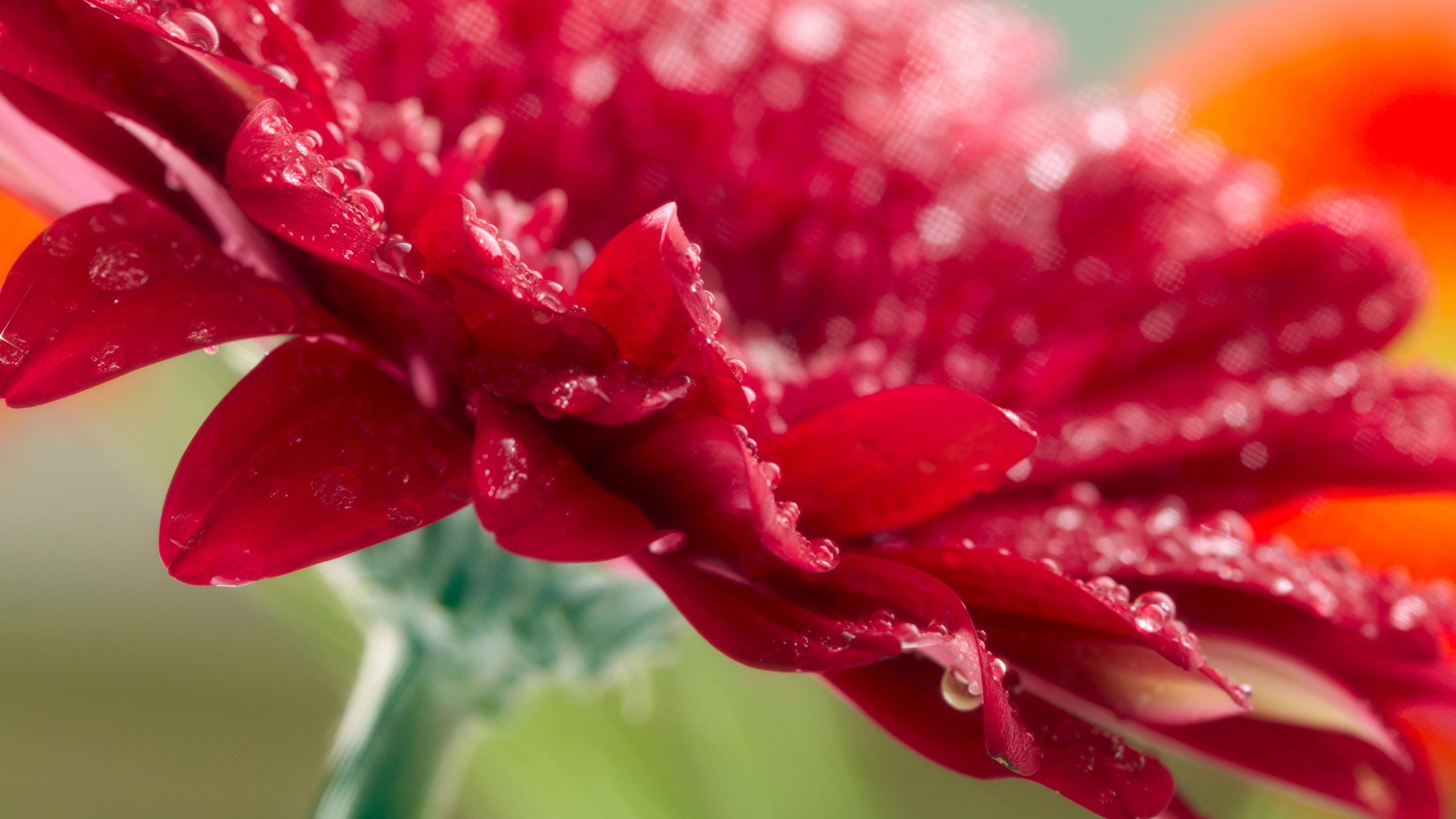 природа цветы белые красные без смс