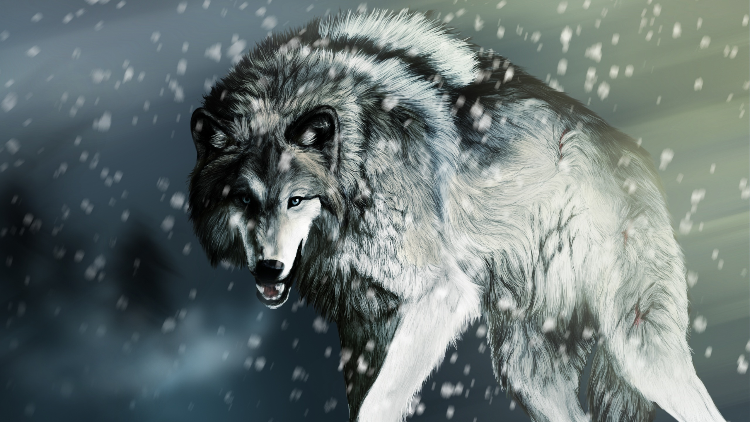 Wallpaper Wounded wolf in the winter