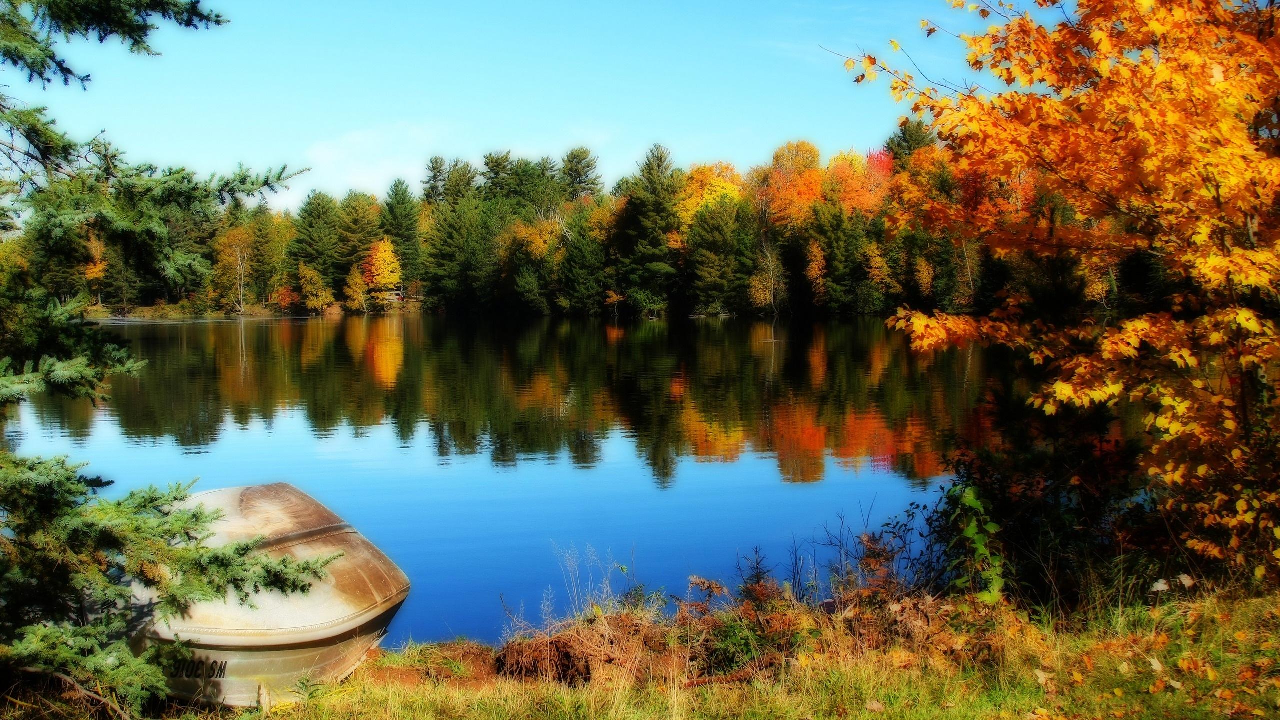 Fonds d 39 cran t l charger 2560x1440 lac et les arbres de for Fond ecran qhd