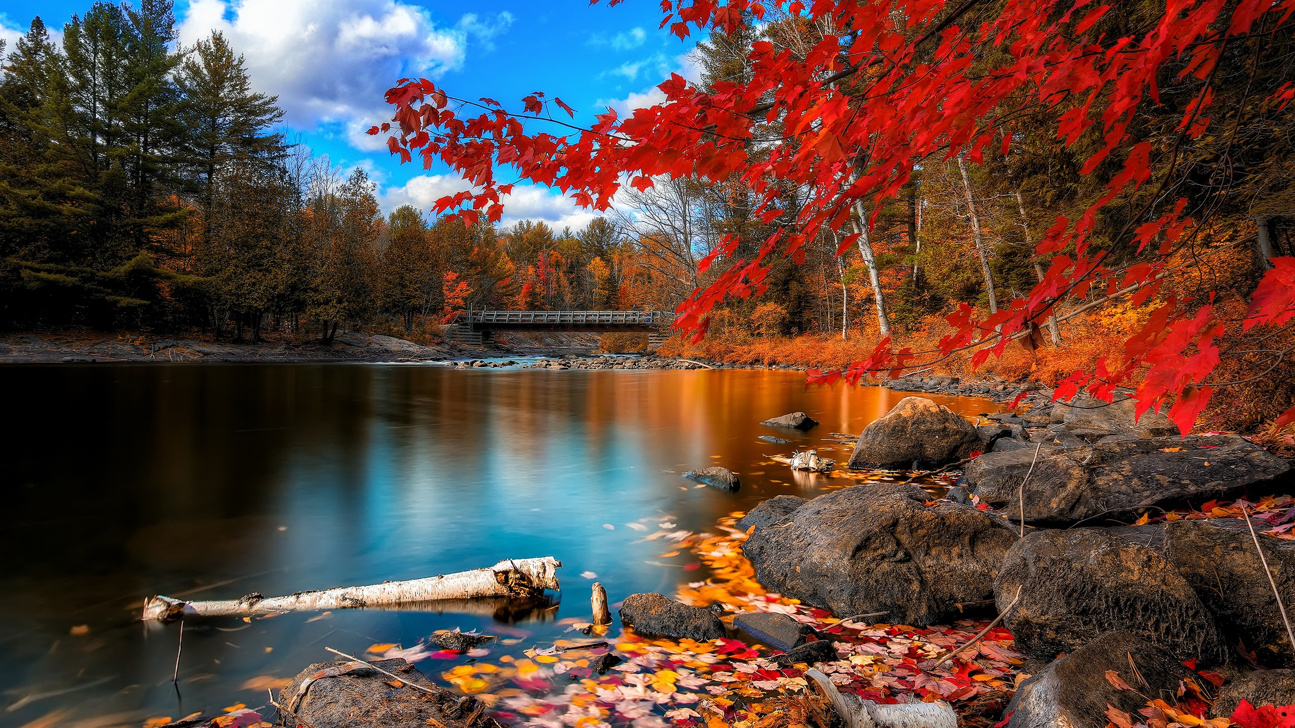 Wallpaper Autumn River Wooden Bridge Woods And Red Leaves