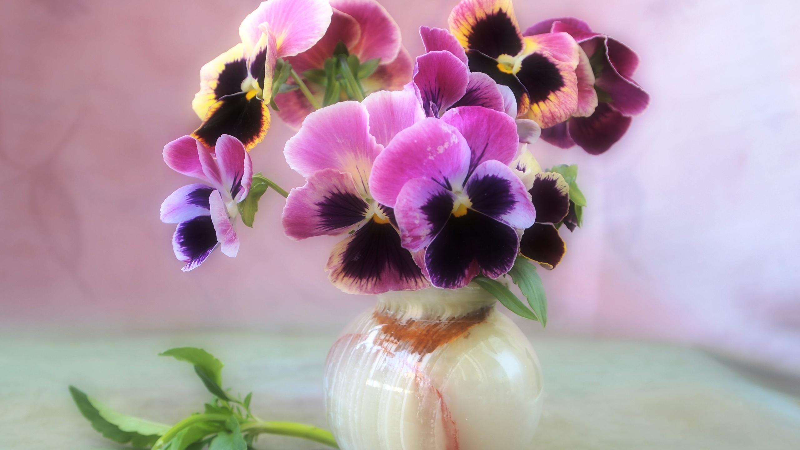 Цветы фиалки красивые