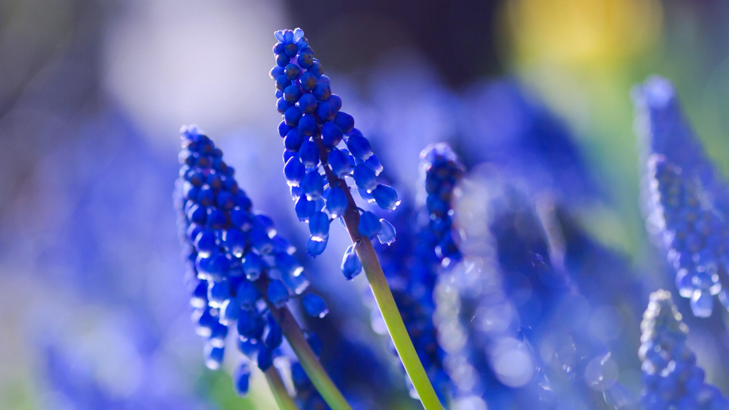 Красивые картинки синие тона