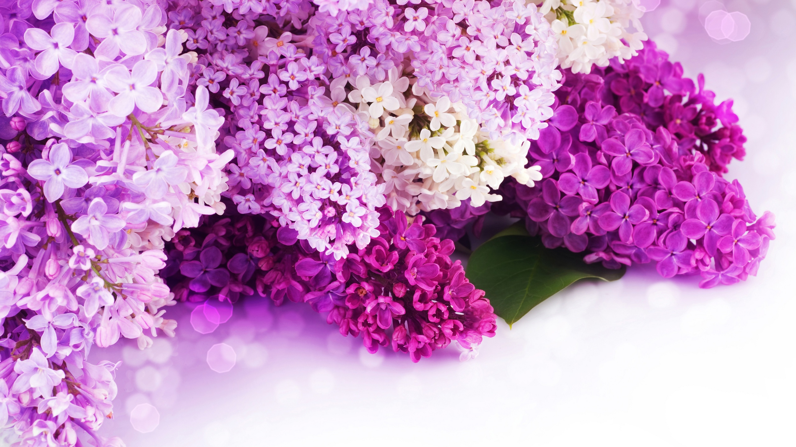 lilac flower wallpaper jpg - photo #31