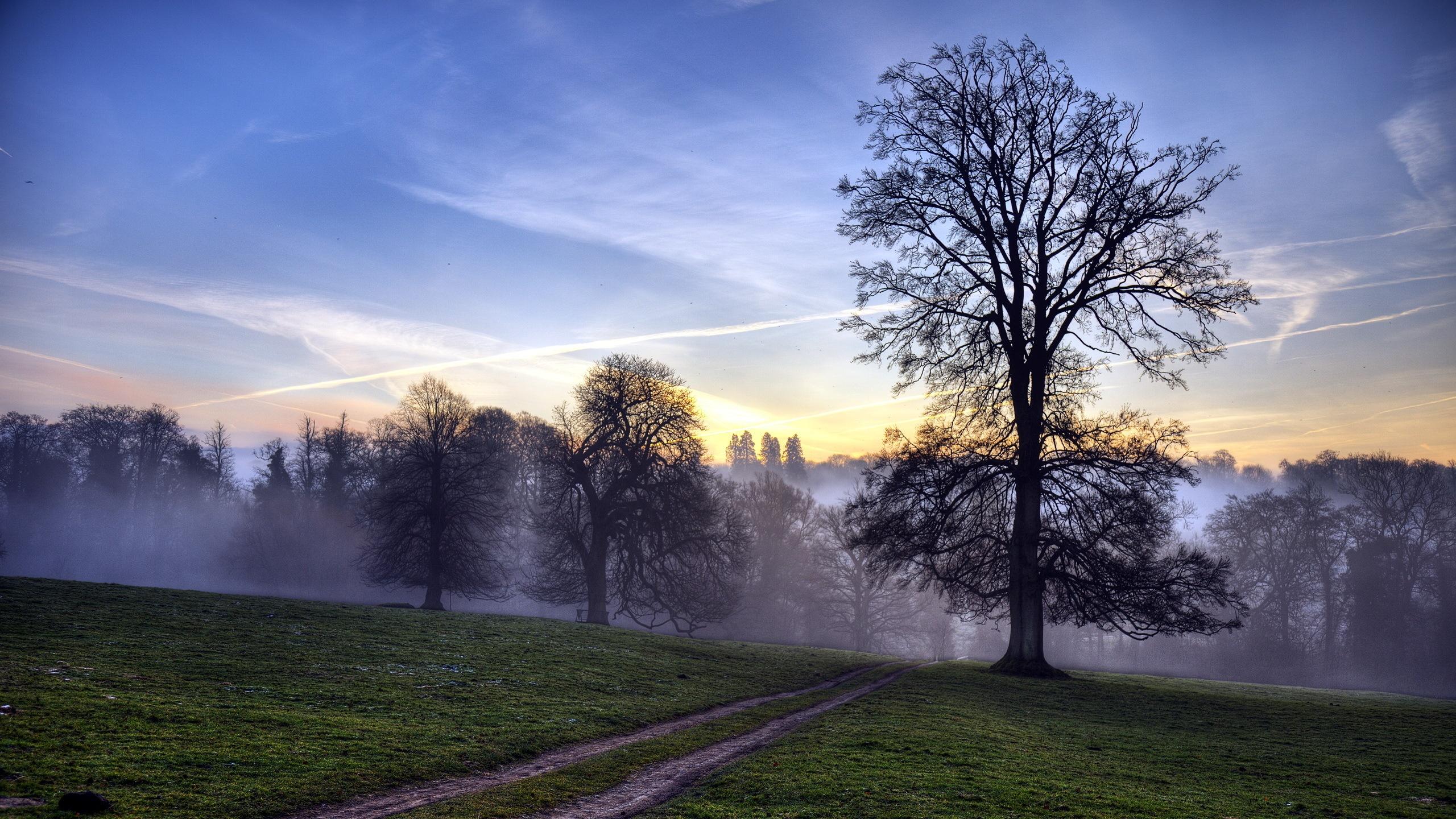 壁纸 清晨的森林,薄雾,树木,阳光光线 2560x1440 QHD 高清壁纸, 图片, 照片
