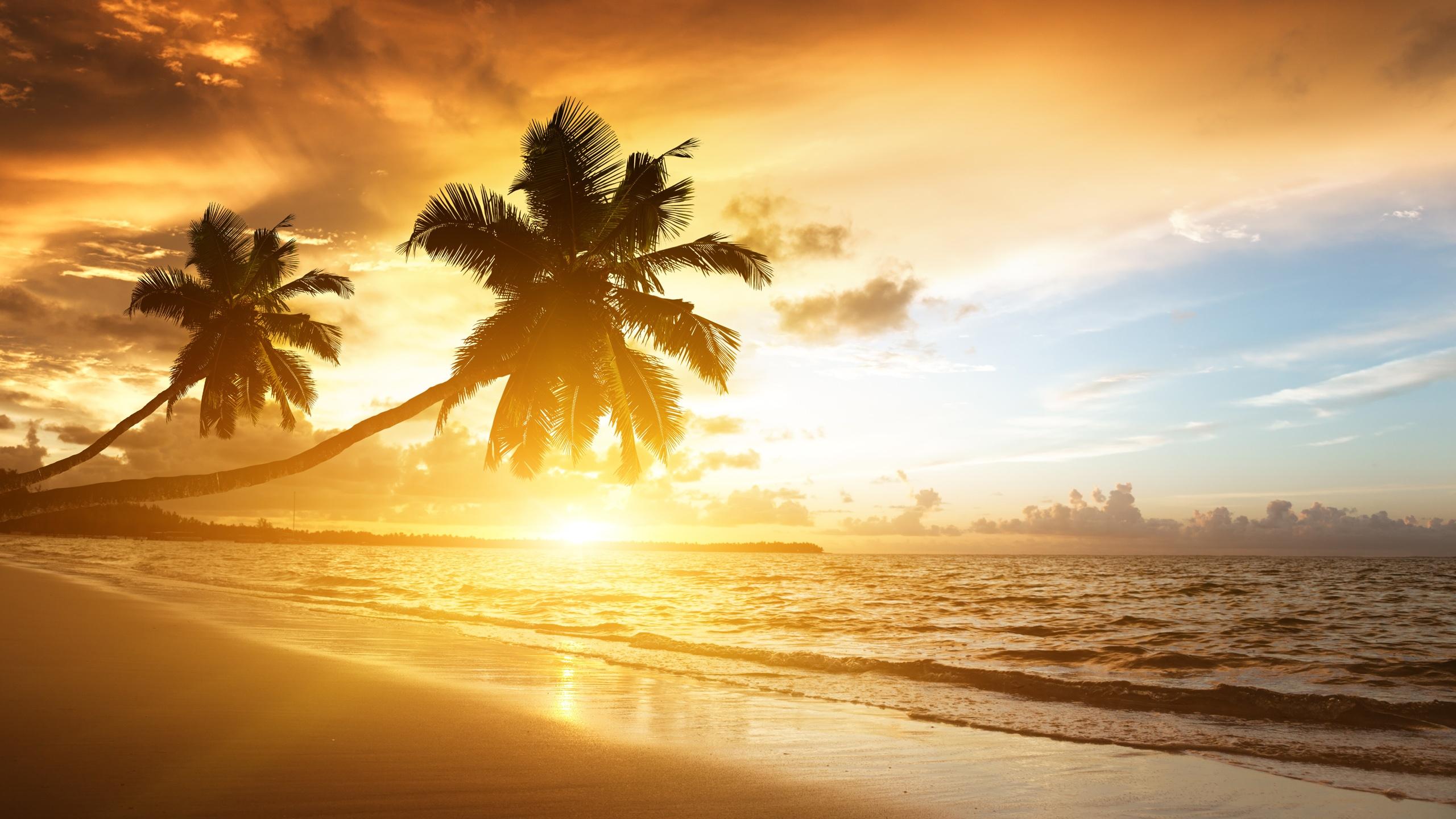 Пальмы, солнце, небо без смс
