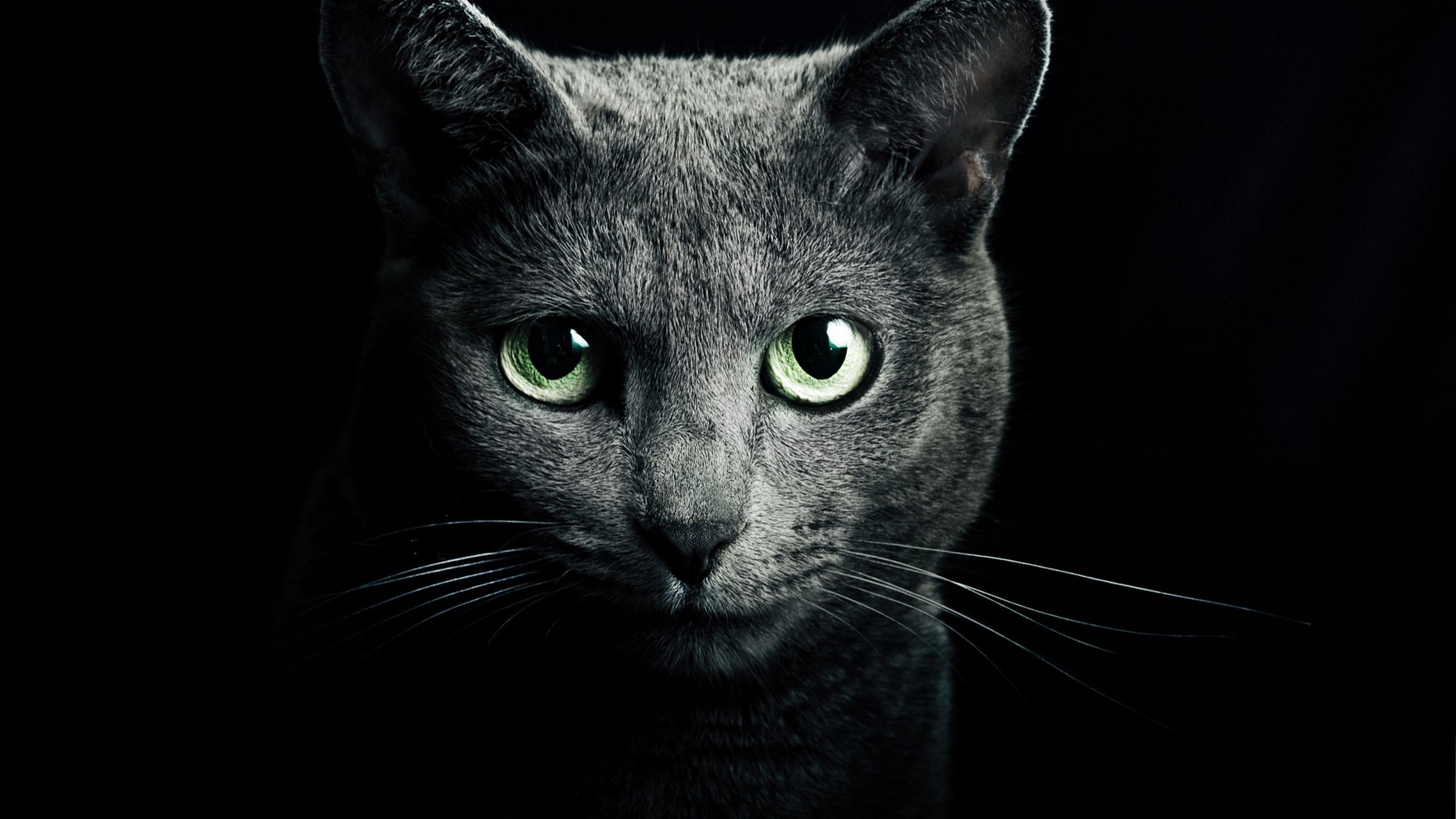 Fonds d'écran Chat noir, yeux verts, fond noir 2560x1920 HD image