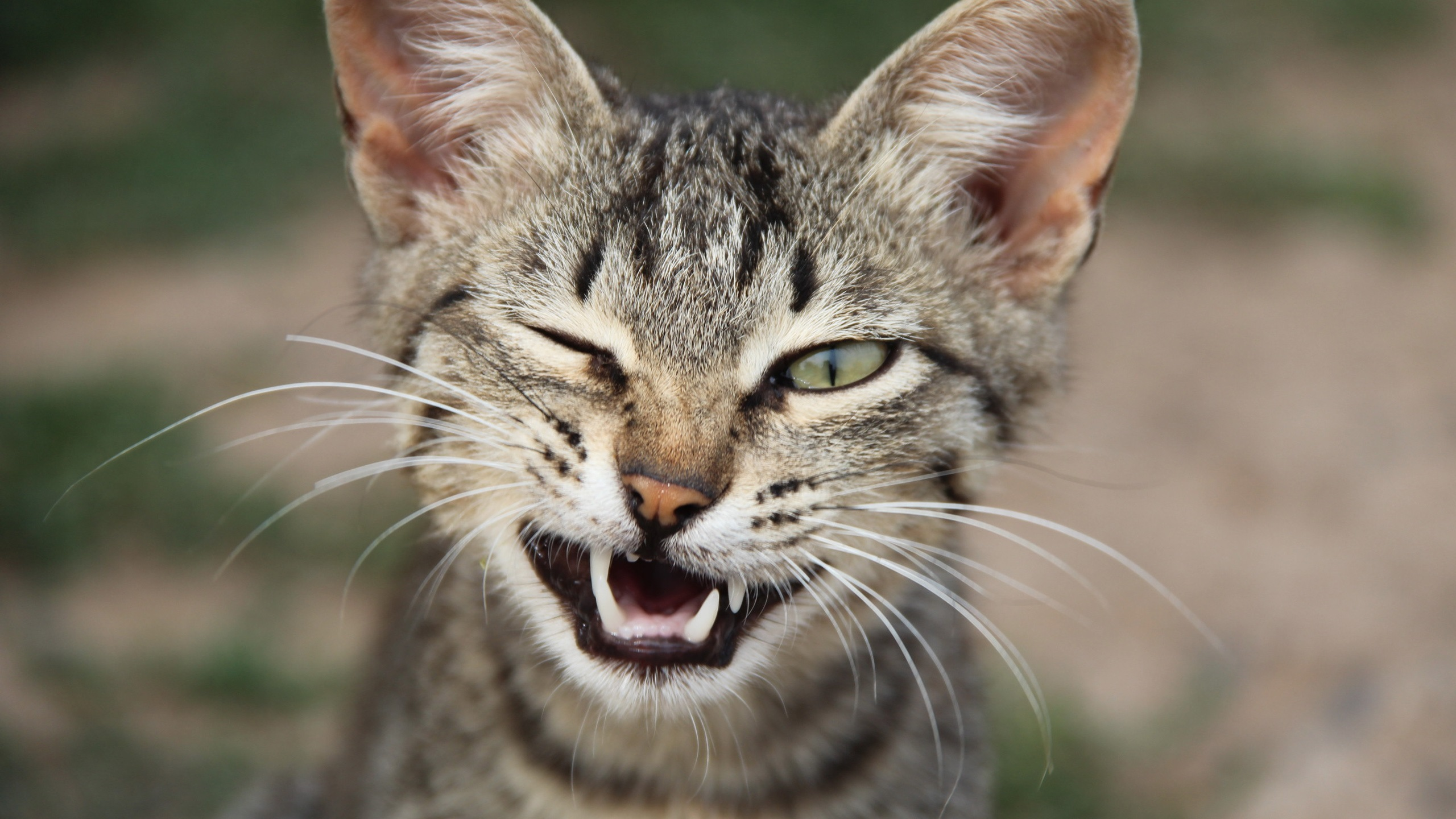 Картинка котенок подмигивает
