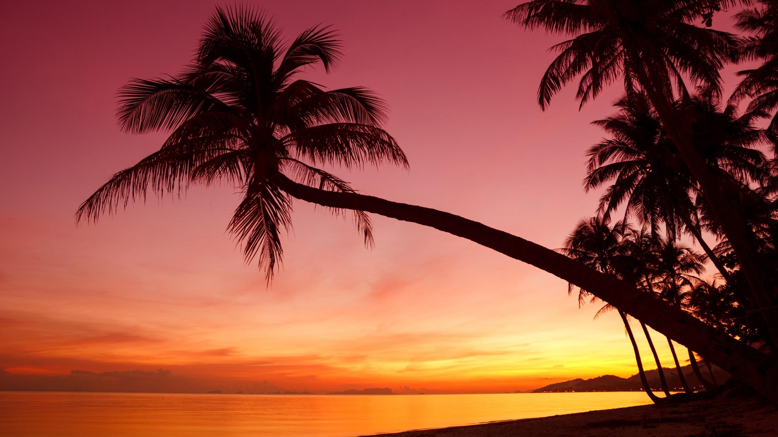 Wallpaper Tropical Sunset Palm Trees Silhouette Beach