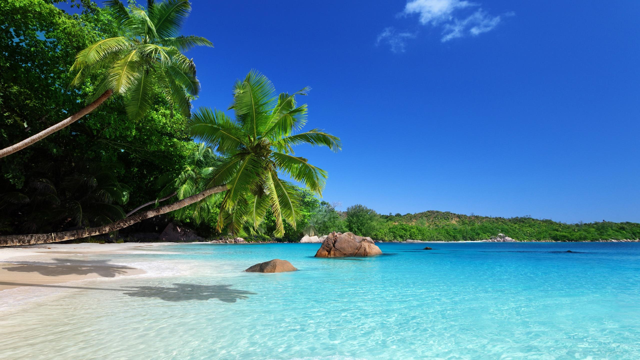 download hintergrundbilder 2560x1440 qhd tropisches paradies sonne strand k ste meer palmen. Black Bedroom Furniture Sets. Home Design Ideas