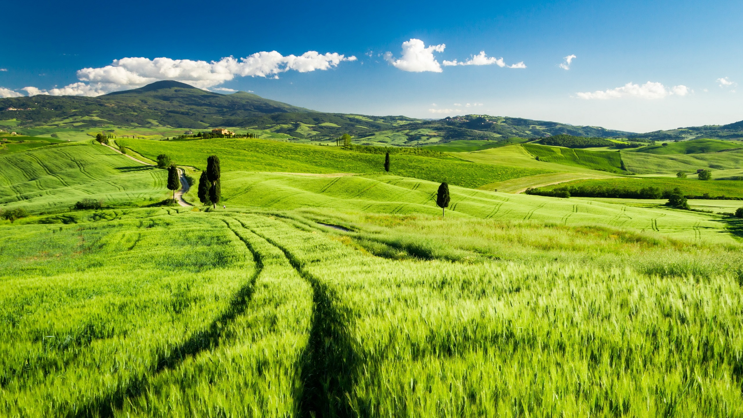 <<<Poemas de colores...>>> Tuscany-Italy-green-fields-spring_2560x1440