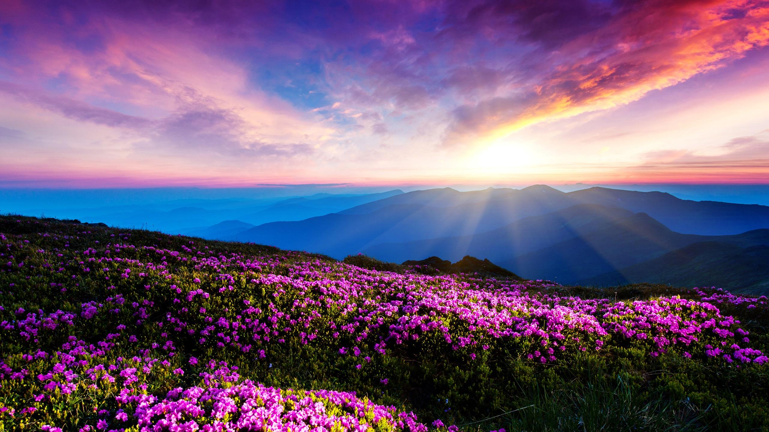 Весенний Пейзаж Бесплатные изображения на Pixabay