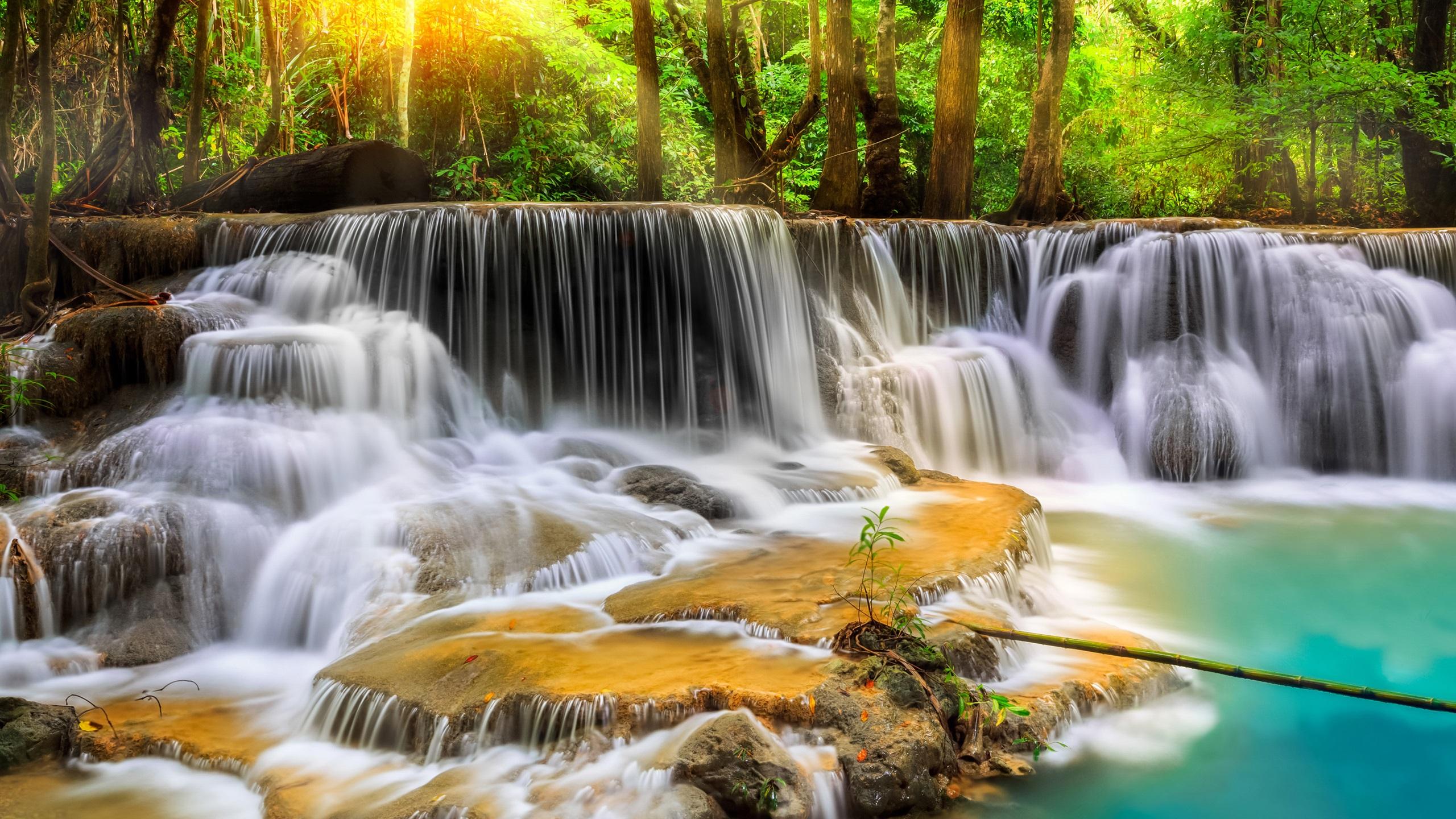 Thailand forest trees waterfalls stream 2560x1440