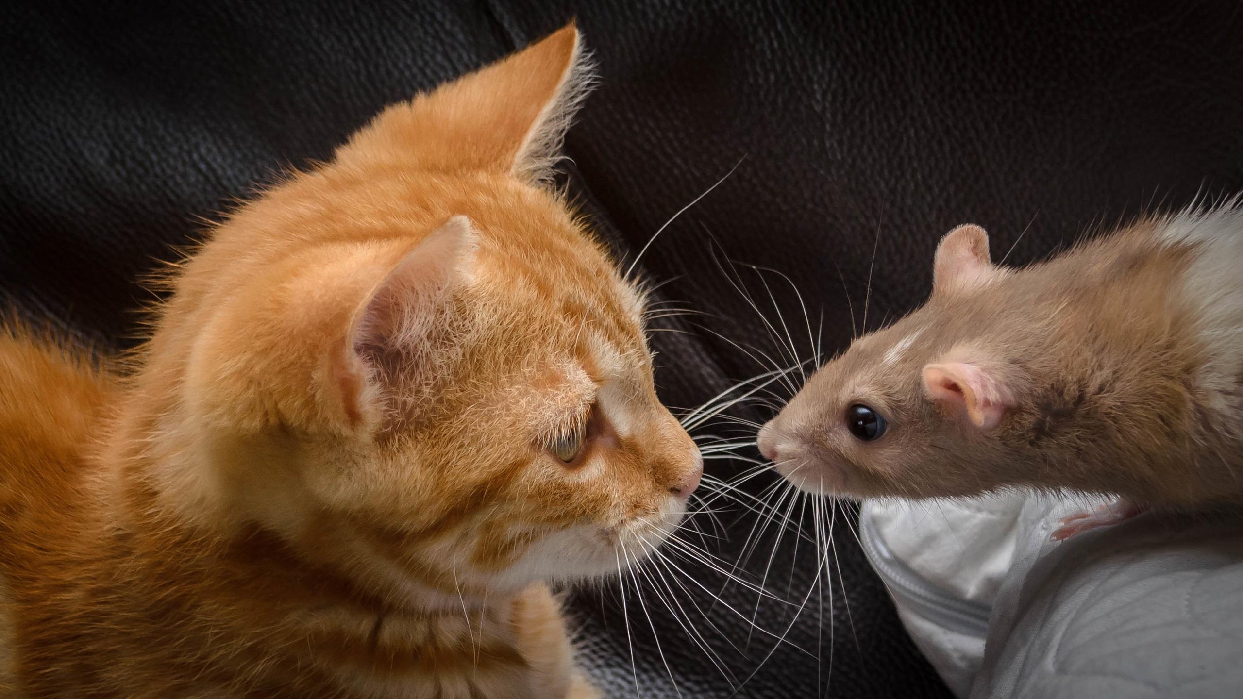 картинки кошки с мышками сертифицированные морские курсы